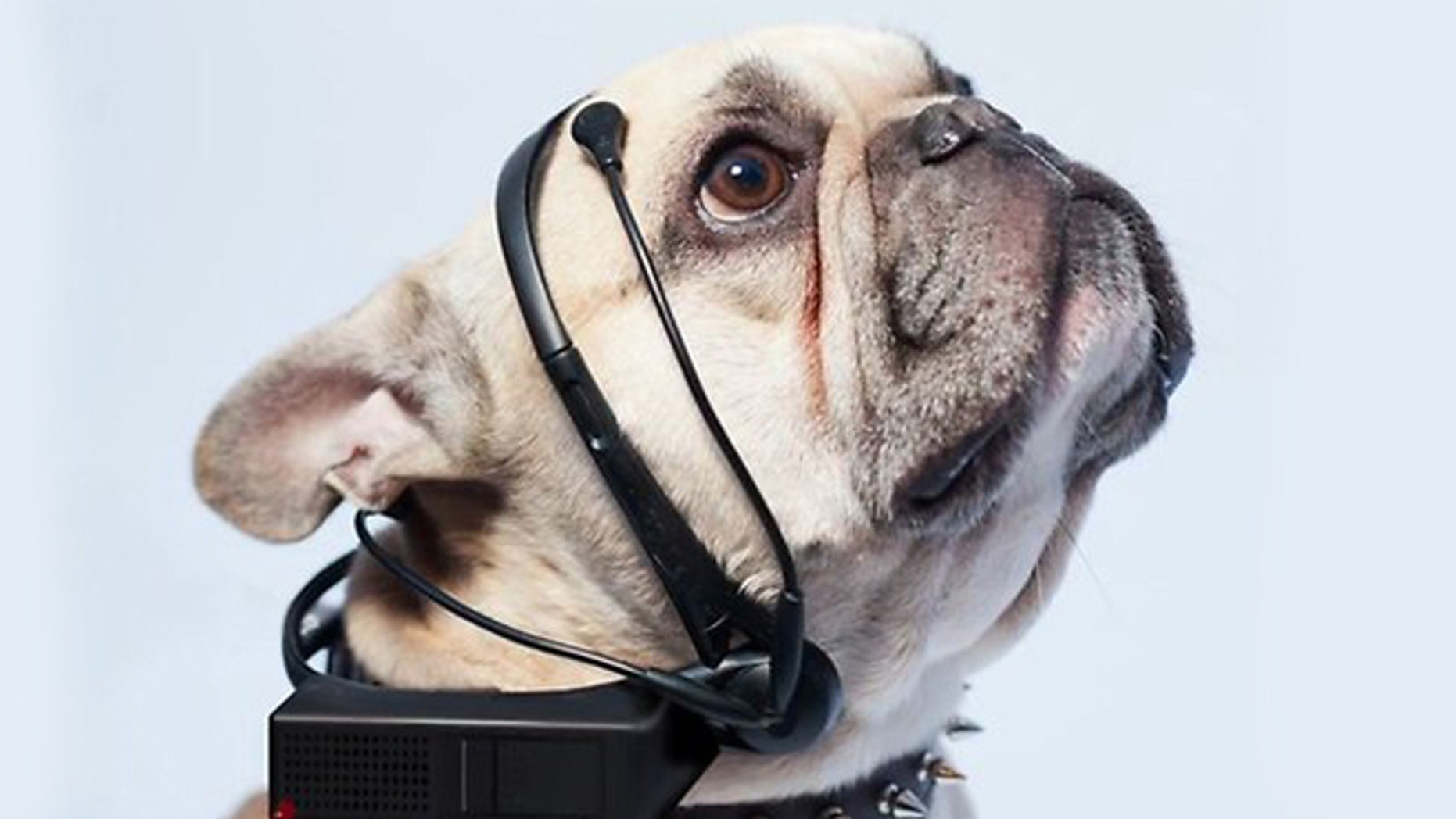 Want to talk to the animals? The Nordic Society for Invention and Discovery's dog translator has now been fully funded.