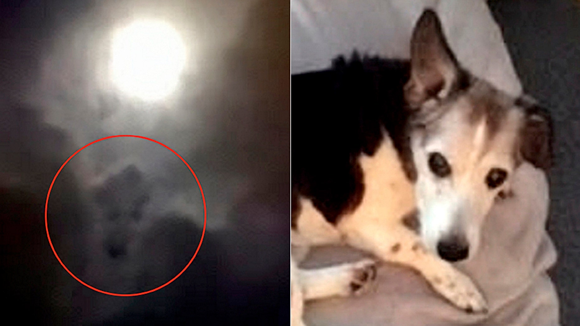 A grieving dog owner's photograph of the full moon has gone viral (Donna Mortlock/SWNS)