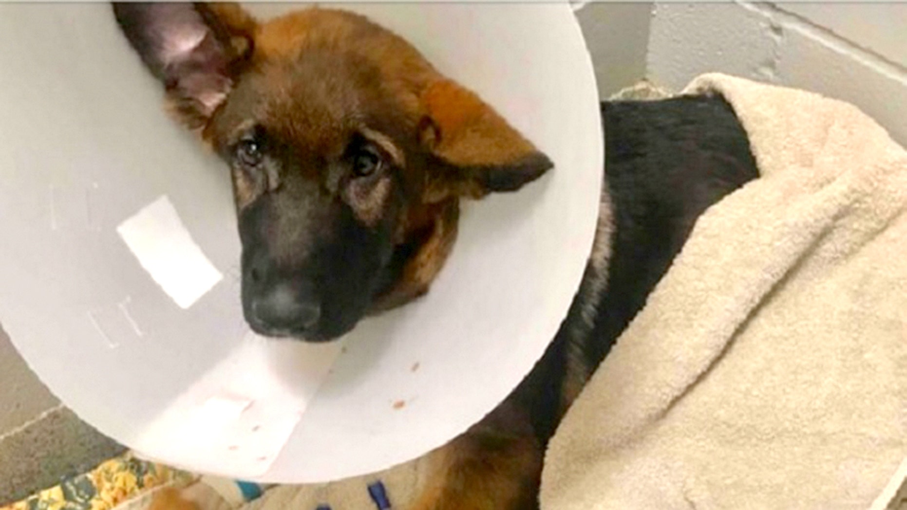 A dog named Atlas was abused so severely it died in February, cops say.