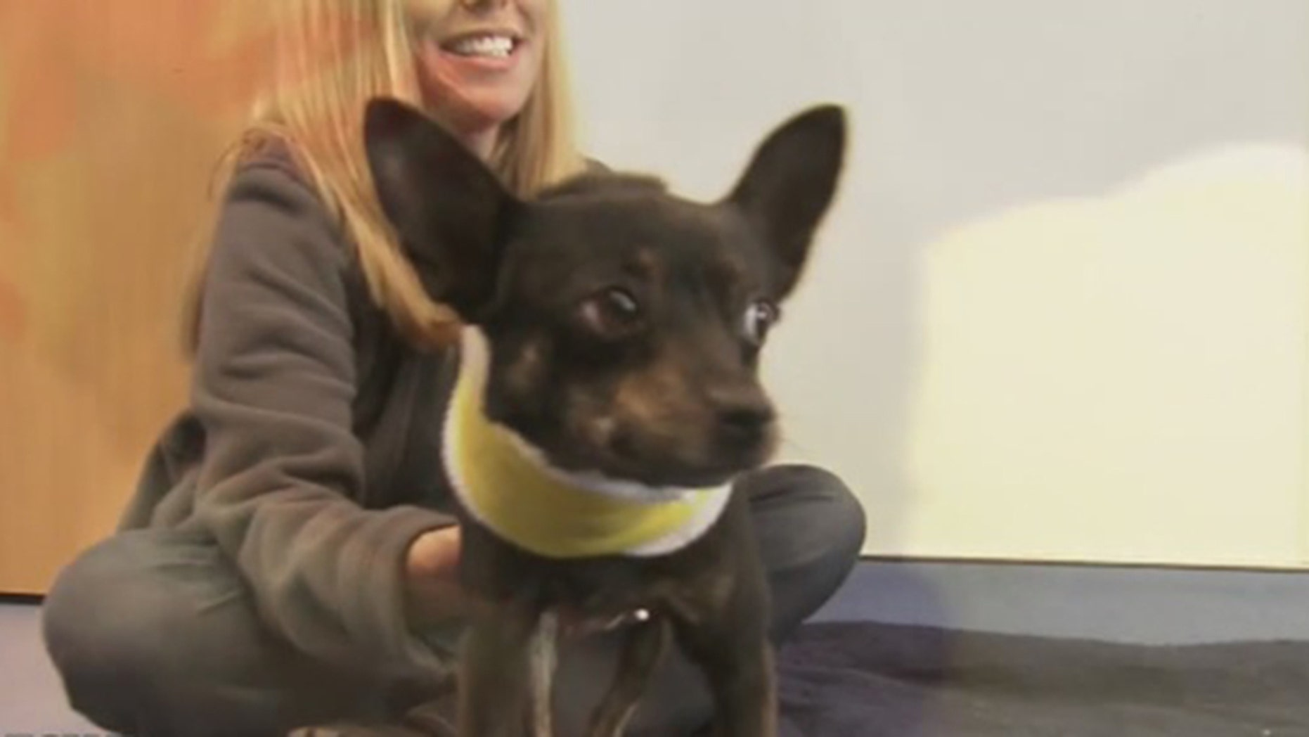Poncho, a stray dog in Georgia, was brought to DeKalb County Animal Services when he was found with a cord wrapped around his neck and a torn trachea.