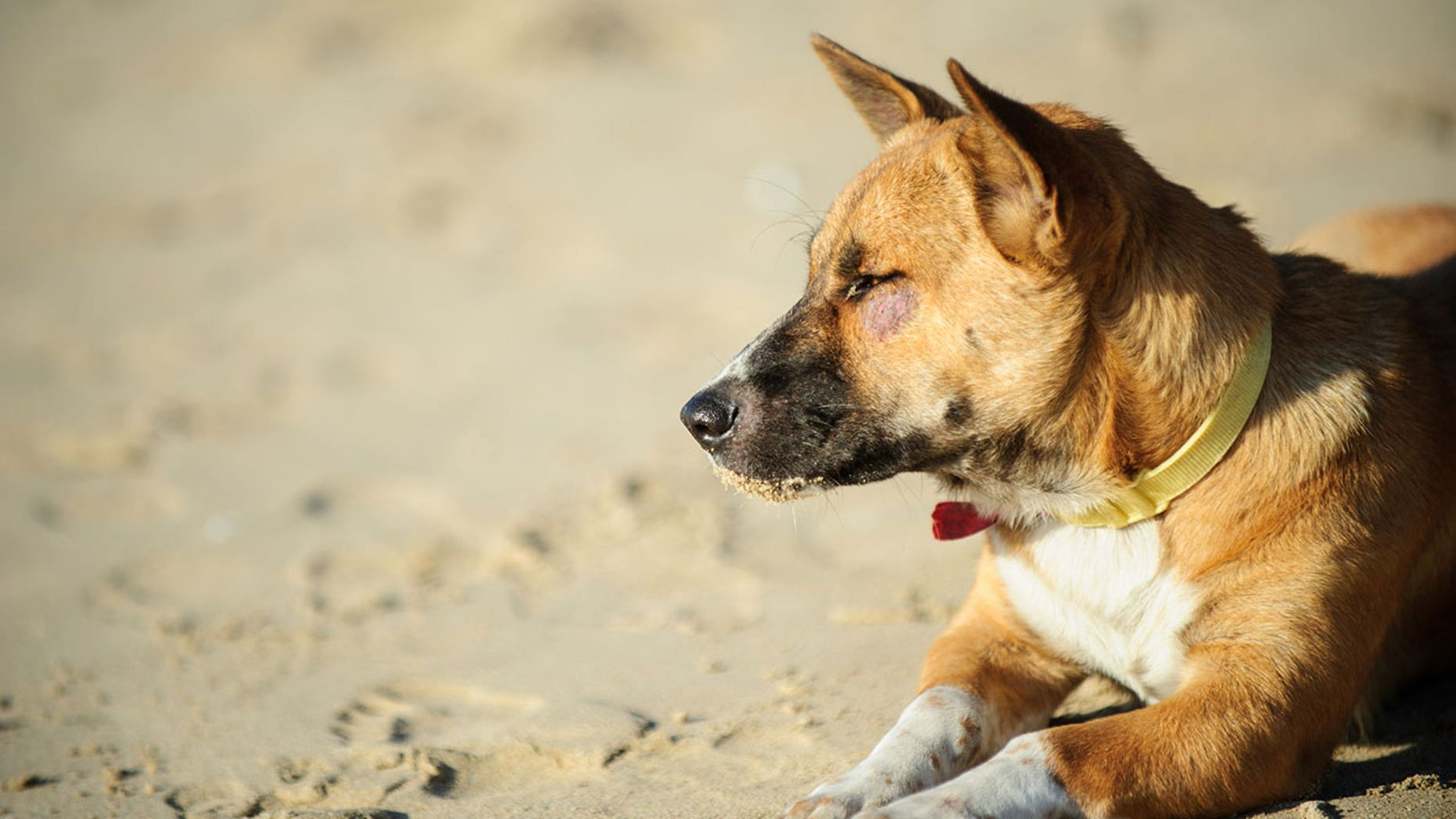 Certain vendors in Bali have been selling beachgoers dog meat, according to an Australian news outlet.