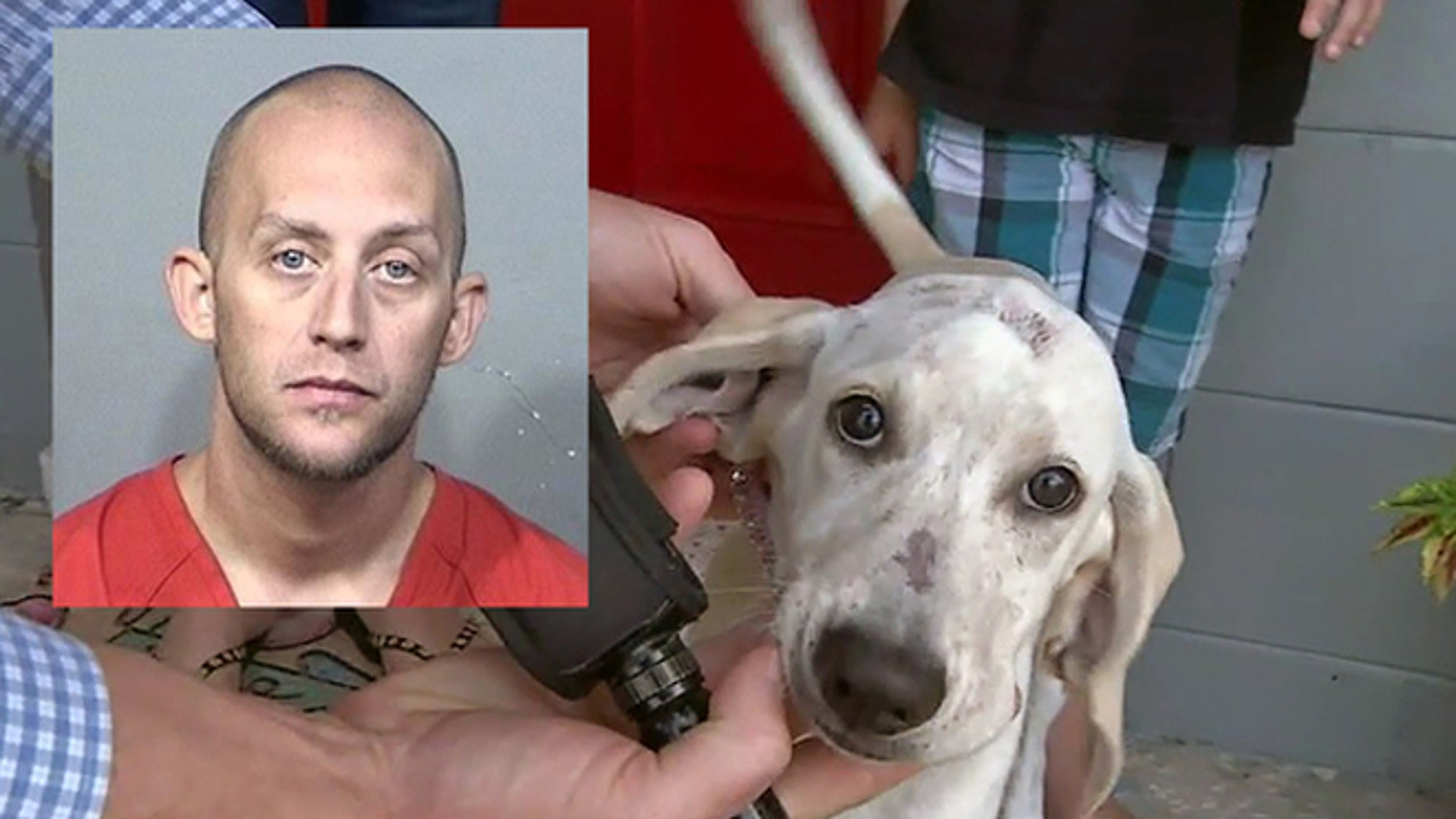 Zachary Kelly, 30, was arrested for allegedly biting the family dog.
