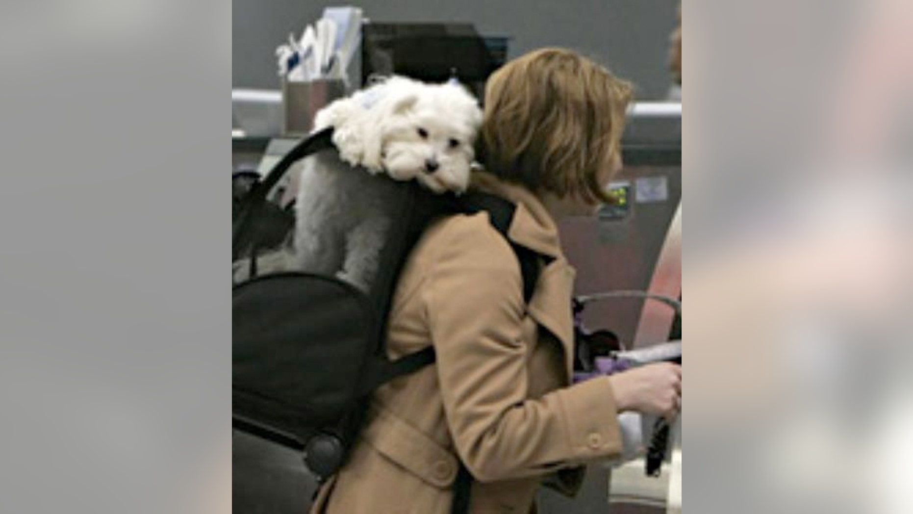 People are gaming the system so pets get special seating during flights.