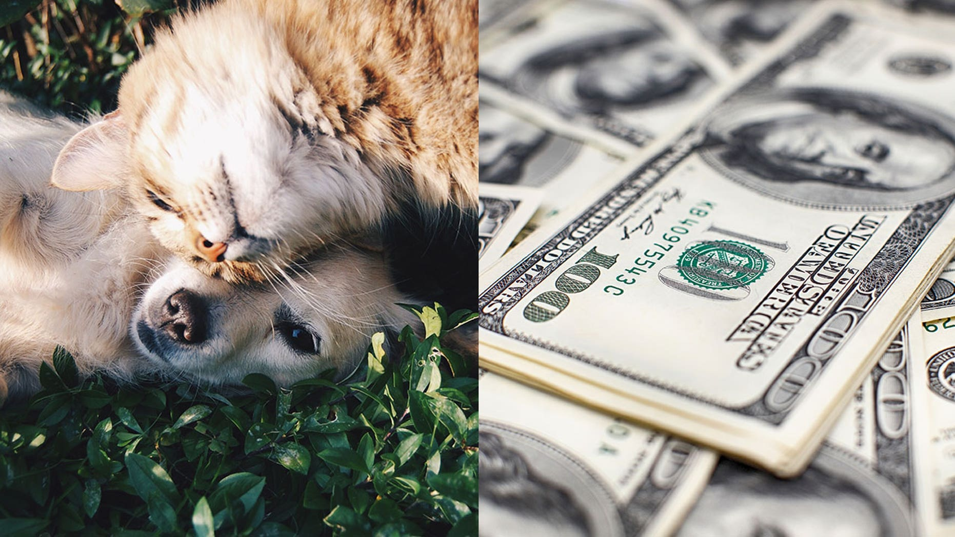 A study of pet-owners outlines the vast differences between dog and cat people — and that includes their income.