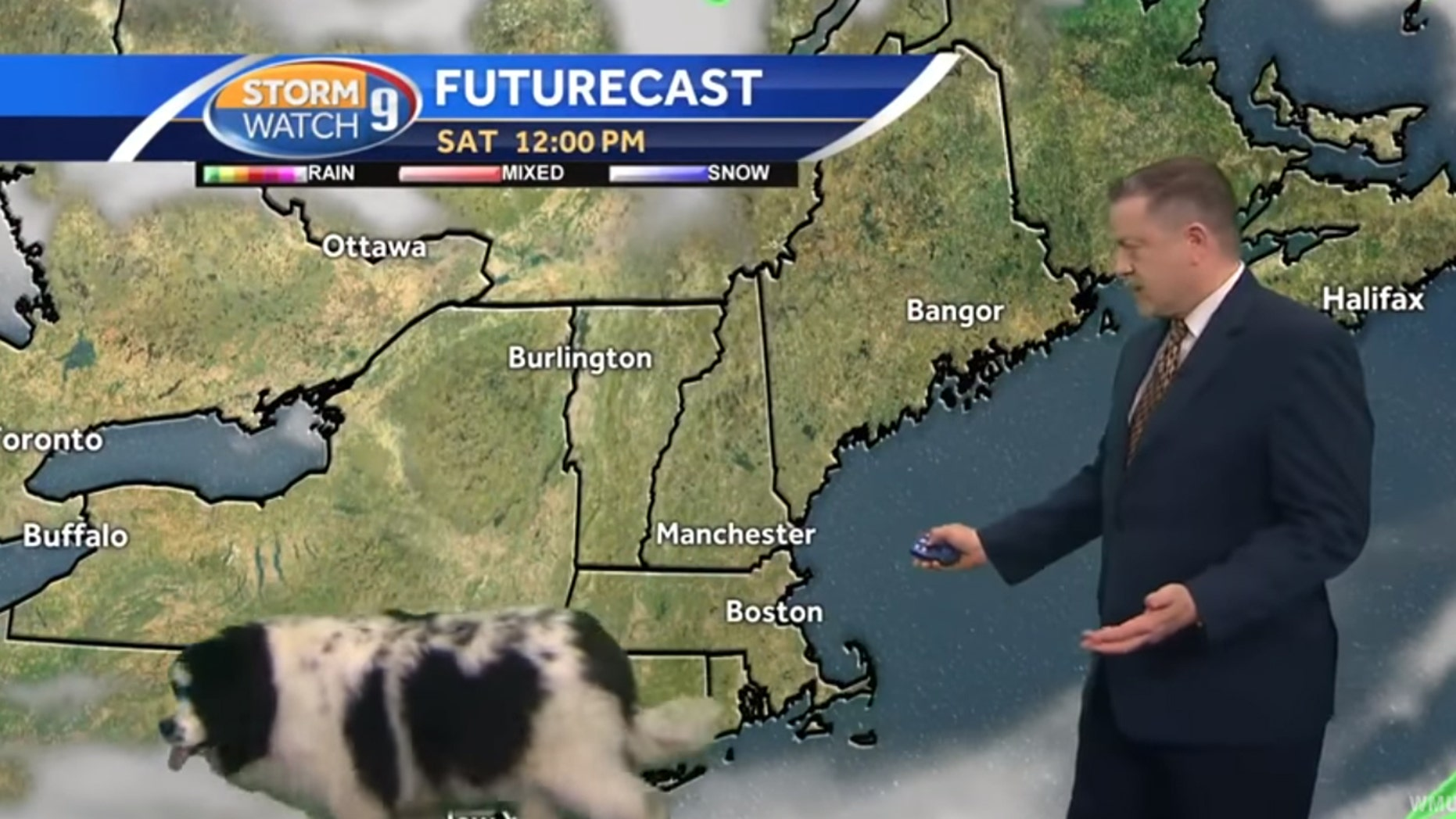 """A dog named """"Bella"""" crashed a live weather update Saturday in New Hampshire."""