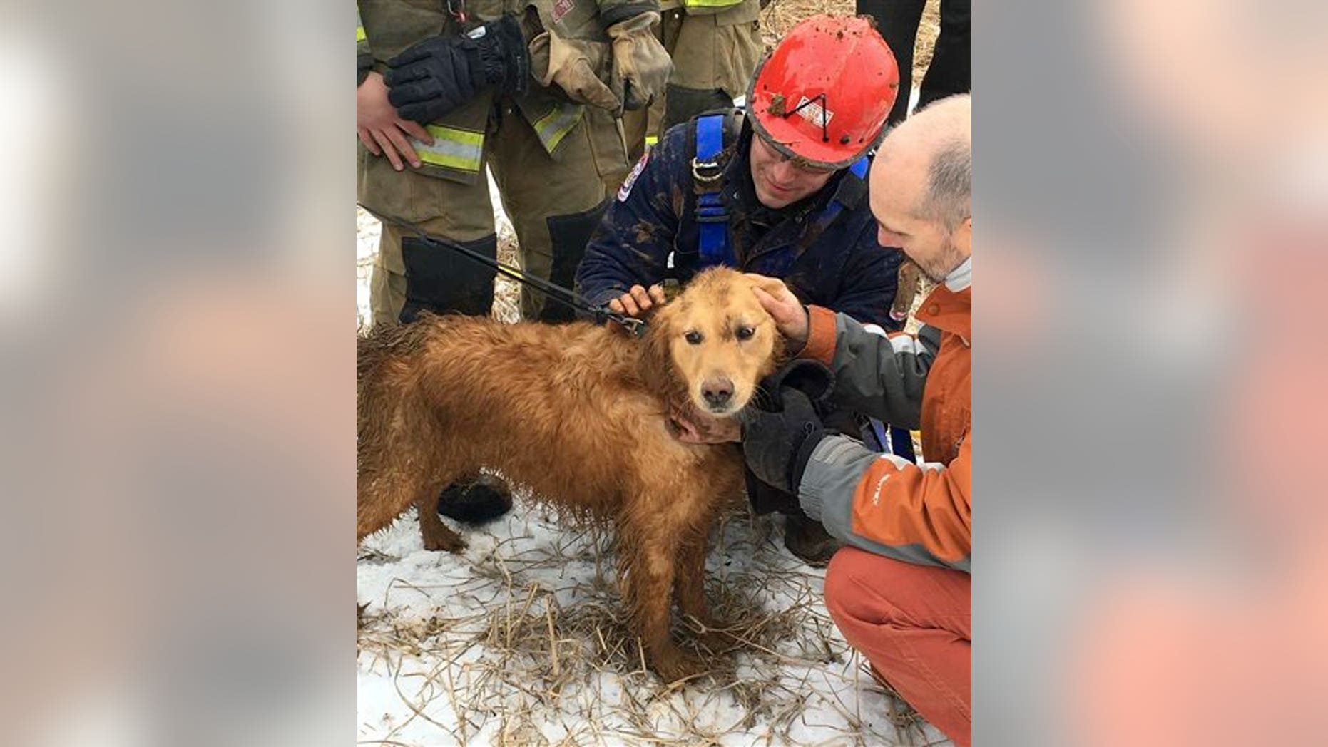 In this photo provided by Ryan McCaughey, rescue workers check Skye, a golden retriever, after being rescued in State College, Pa., Wednesday, Feb. 17, 2016. The dog that spent two nights stuck in a 14-foot-deep sinkhole was rescued Wednesday by firefighters using a makeshift harness. (Ryan McCaughey via AP)