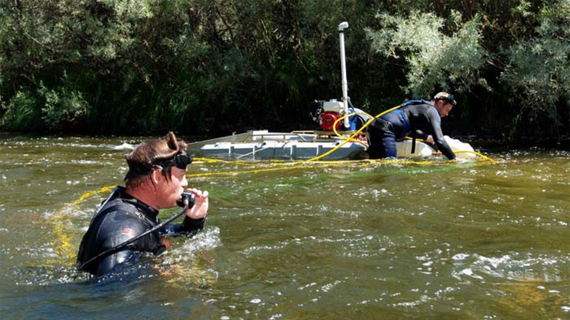 Gold miners say suction dredging is the only effective way of getting gold out of rivers and creeks. (AP)