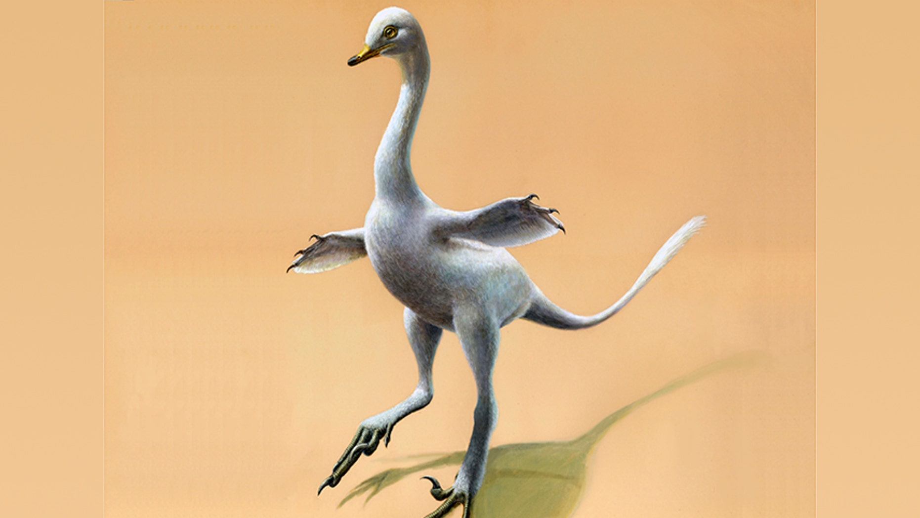 The illustration provided by Lukas Panzarin, with Andrea Cau for scientific supervision, shows a Halszkaraptor escuilliei dinosaur.