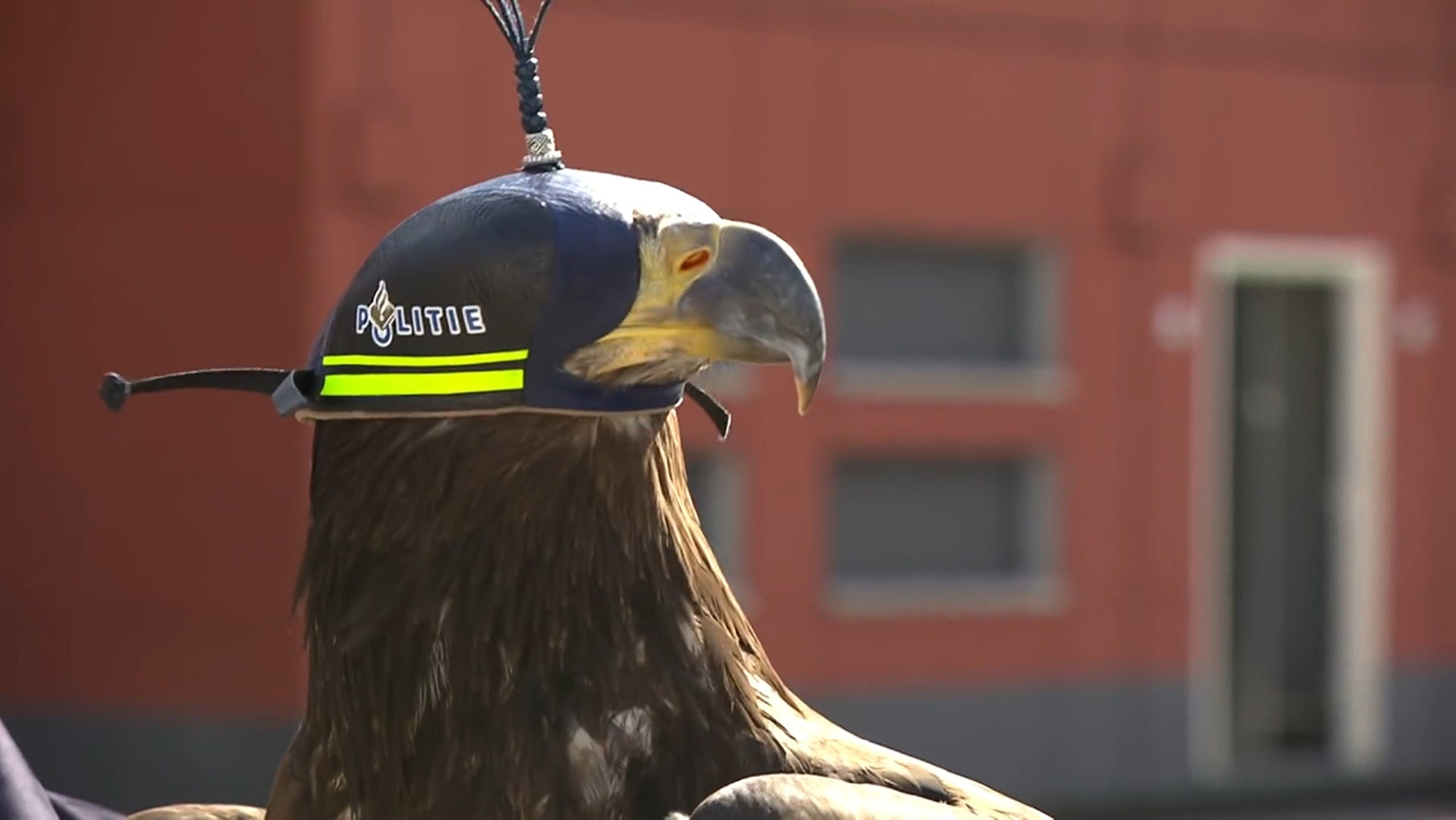 Policing takes flight in the Netherlands, with eagles joining Dutch officers to combat hostile drones.