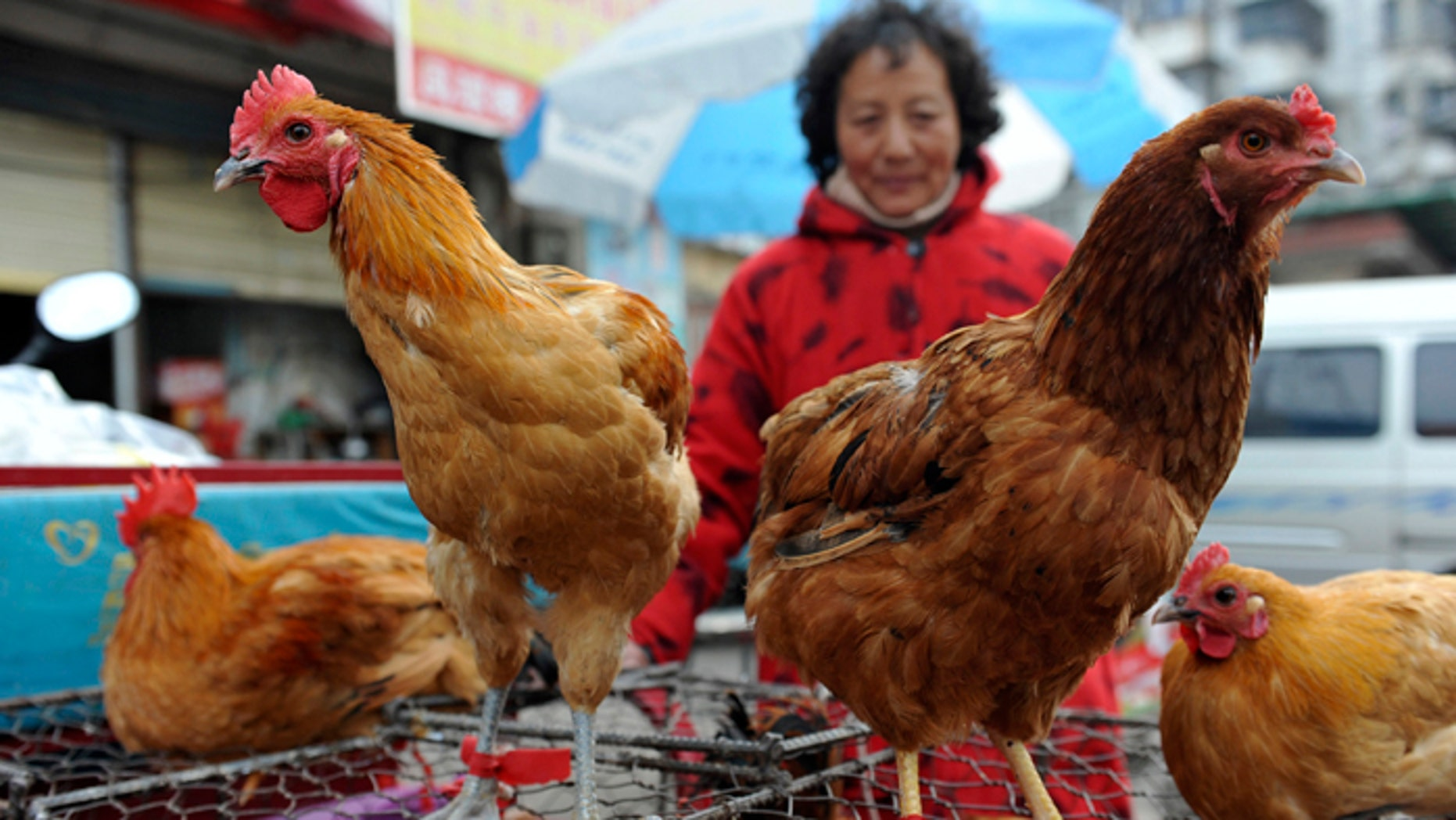 A vendor waits for customers near chicken cages at a market in Fuyang city, in central China's Anhui province. Two Shanghai men have died from a lesser-known type of bird flu in the first known human deaths from the strain.