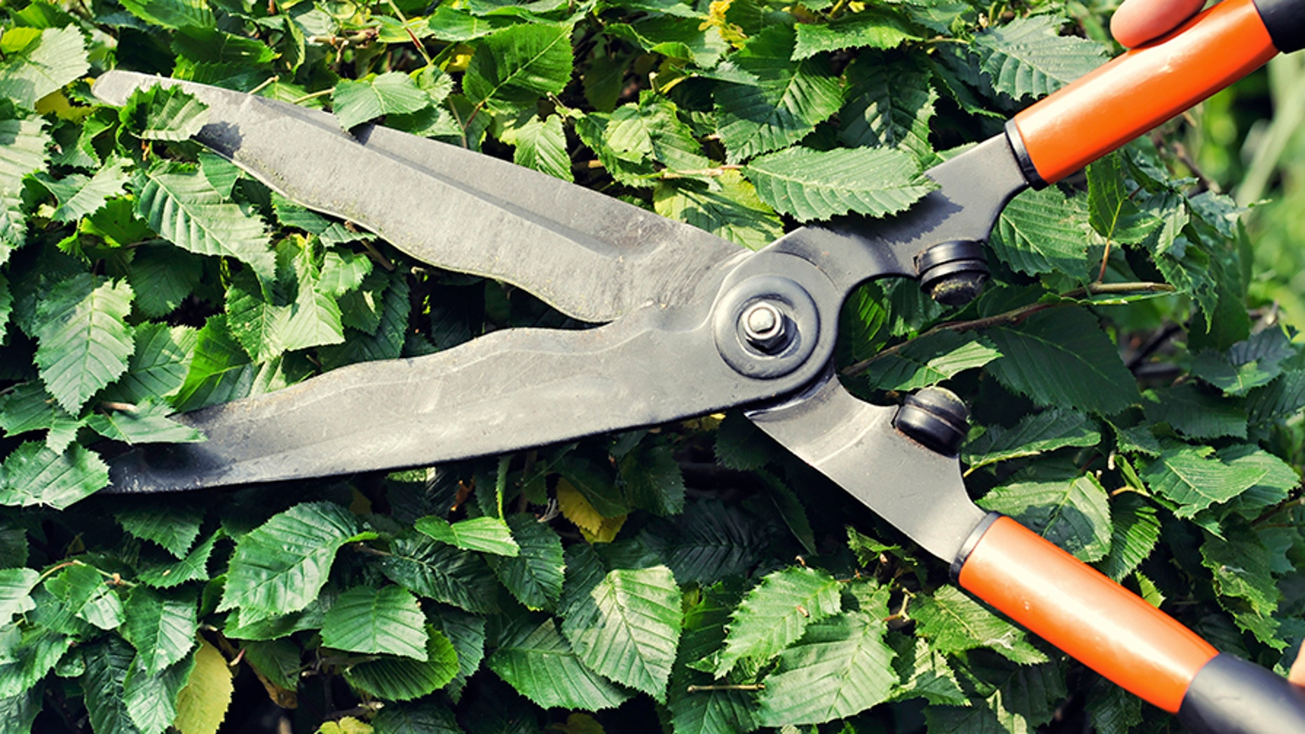 Brenda Barattini, 26, has been accused of cutting off a 40-year-old man's penis with gardening scissors.