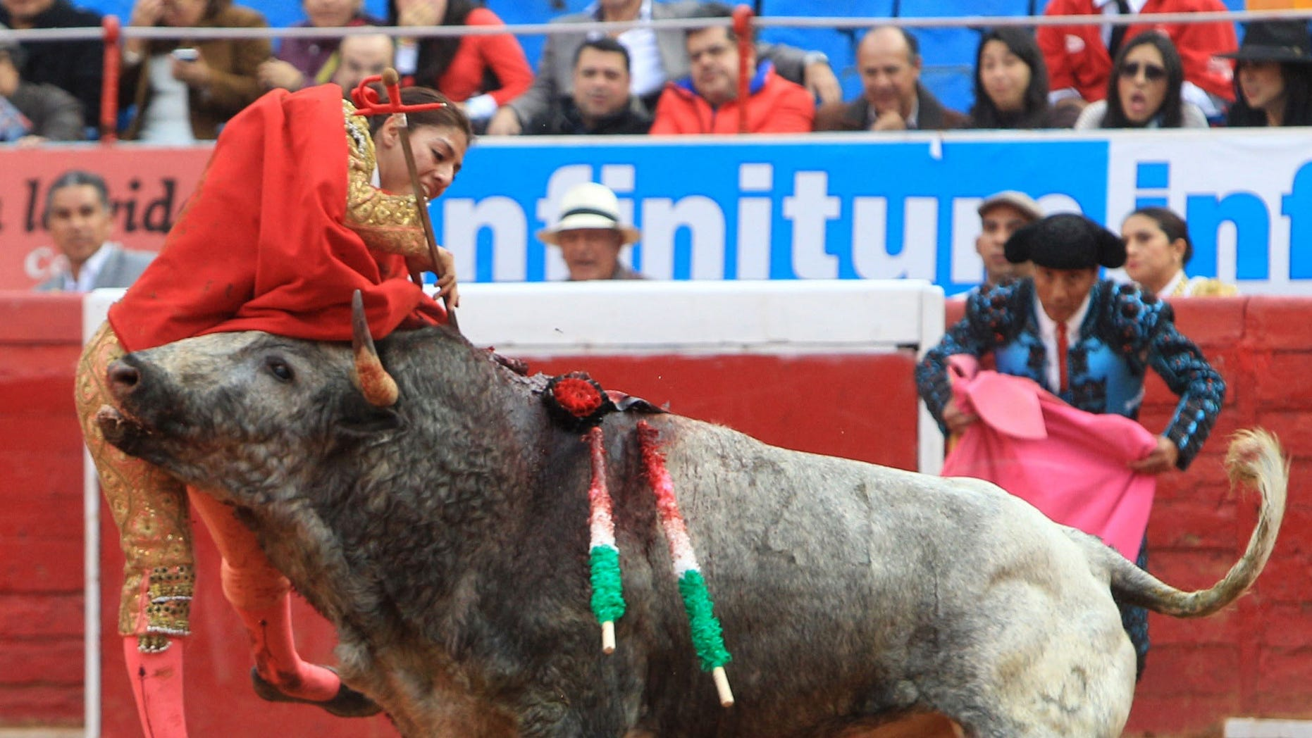 """In this Dec. 28, 2014 photo, Karla de los Angeles, one of Mexico's few female bullfighters, is gored by a bull during a bullfight in Mexico City. The 26-year-old bullfighter who suffered a pair of gashes to the thigh and buttock when she was gored twice by the bull says she is determined to return to the ring by mid-January, two days after she and several others were gored by what she described as a """"very smart"""" bull. (AP Photo/Gabino Acevedo, Cuartoscuro.com) MEXICO OUT - NO PUBLICAR EN MEXICO - MANDATORY CREDIT - CREDITO OBLIGATORIO"""