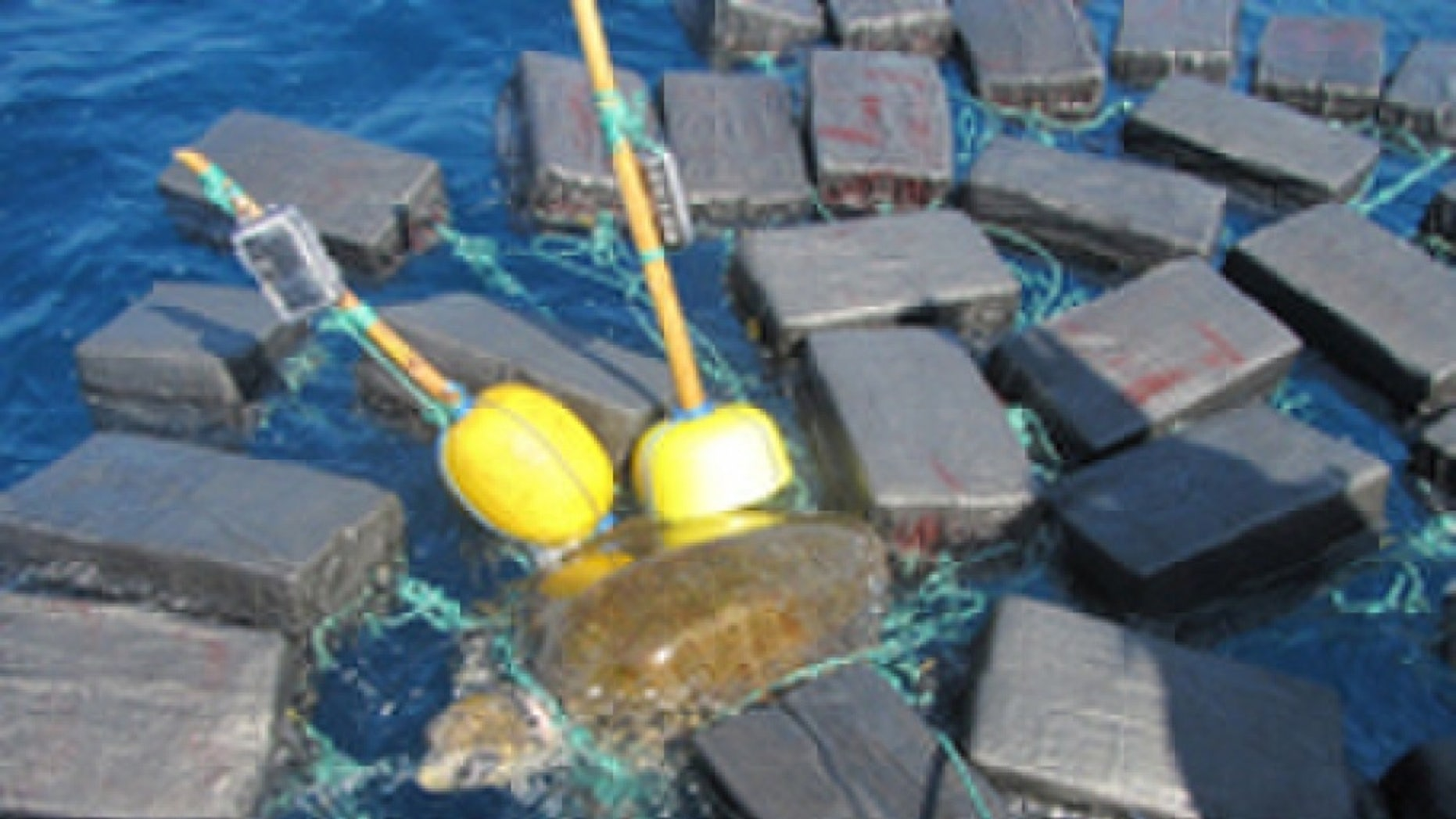 The sea turtle was found entangled in bales of cocaine worth $53 million, the U.S. Coast Guard said.