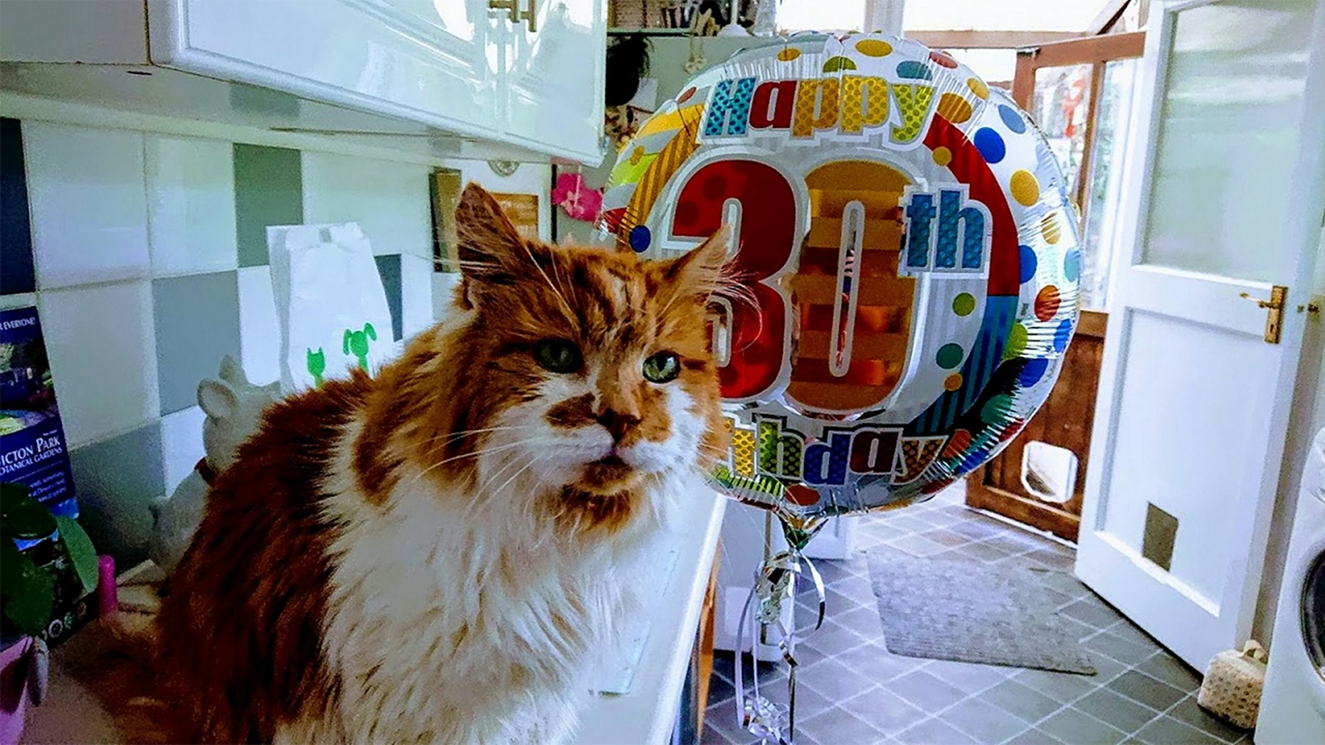 Rubble, who just turned 30, has been hailed as the world's oldest cat.