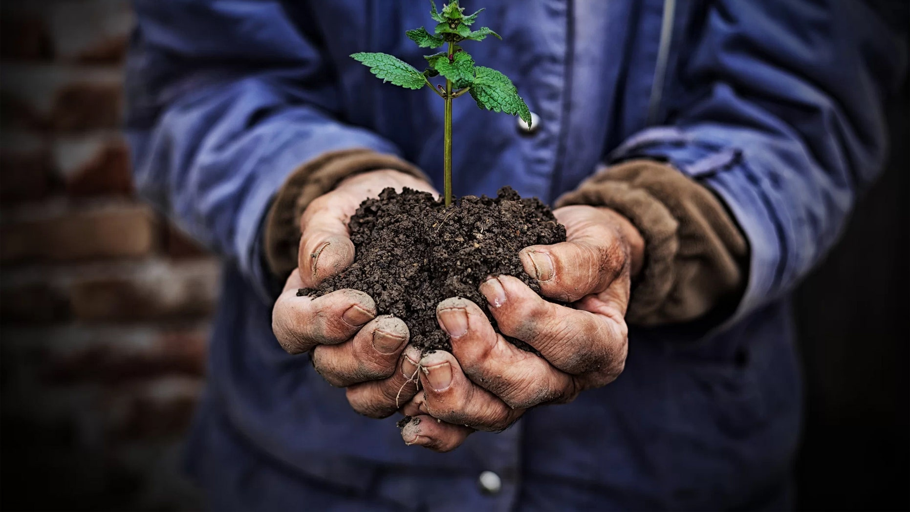 Earth's soil contains roughly twice as much CO2 as Earth's atmosphere — and it's escaping faster and faster. Credit: Getty