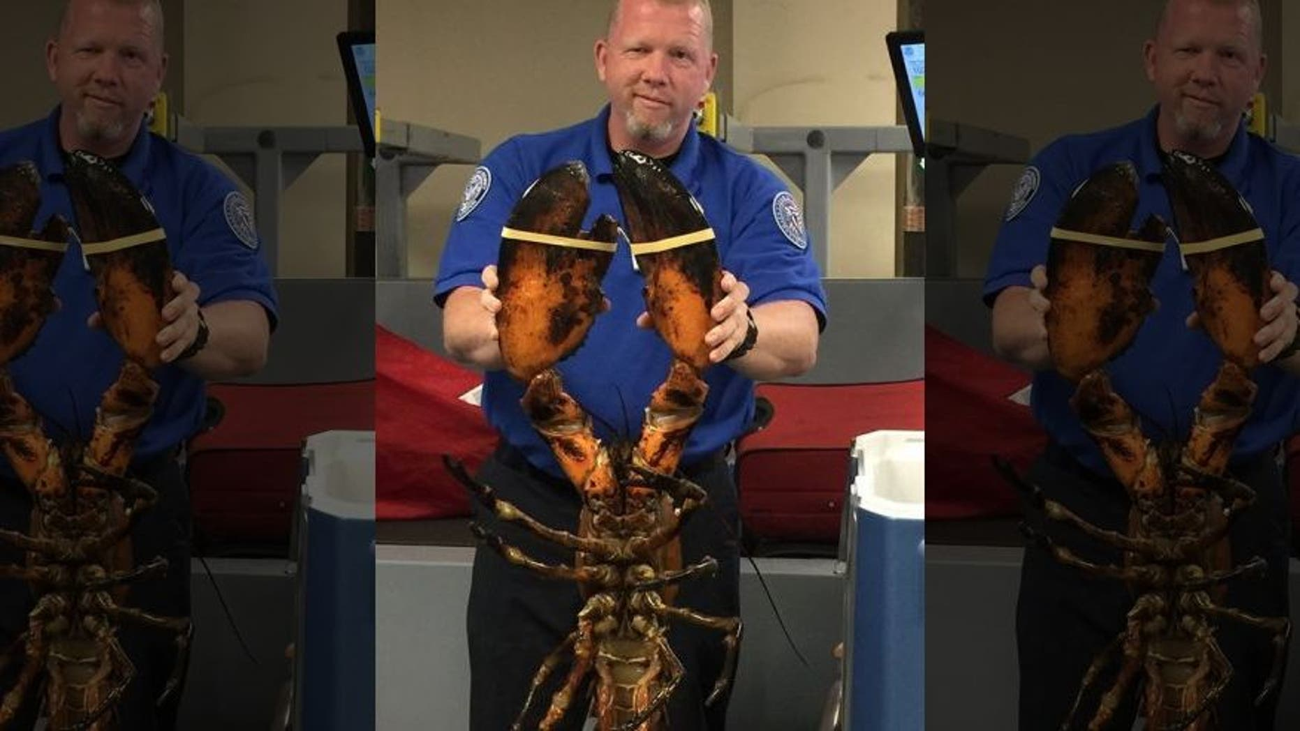 A TSA agent holds a live lobster found in a passenger's luggage at Boston's Logan International Airport.