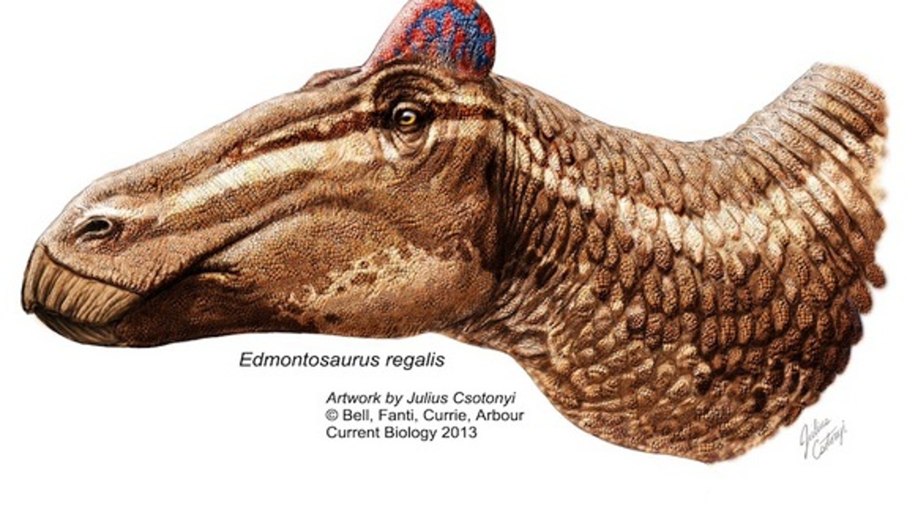 """A reconstruction of <i>Edmontosaurus</i> sporting a fleshy """"rooster"""" comb."""