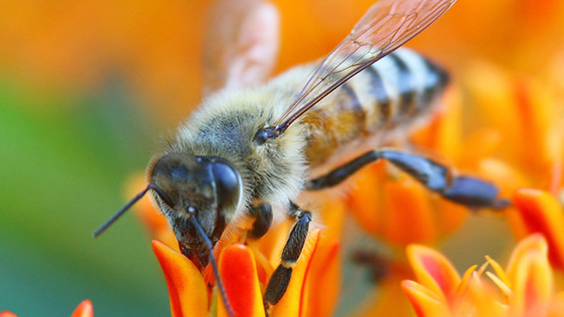 Despite their grass-seed-sized brains, bees have signifcant computational prowess.