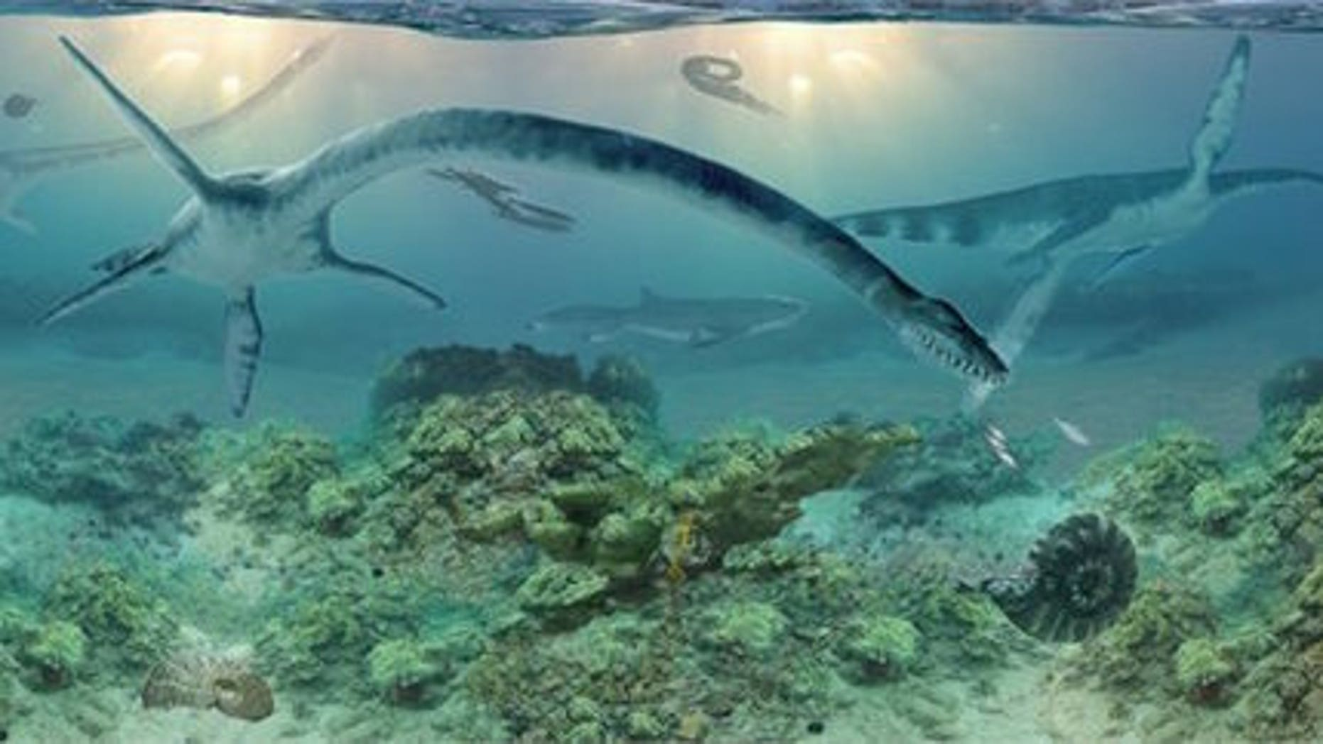 The long-necked elasmosaur as imagined by Anchorage-based artist James Havens, who is working with Druckenmiller to realistically interpret ancient life forms.