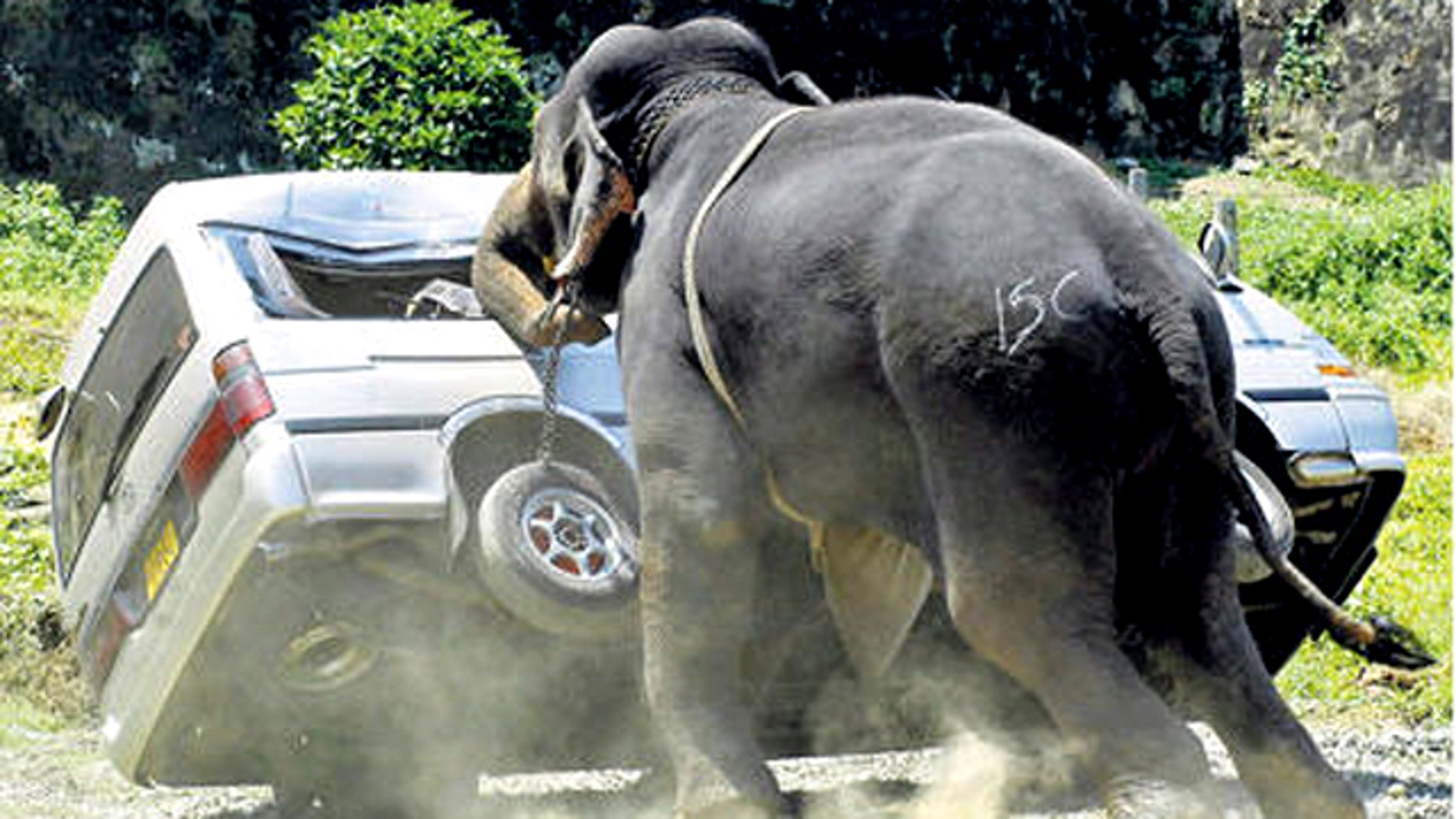 An elephant destoys a minibus after throwing its rider and going on a rampage in Galle, Sri Lanka, in this 2007 photo.