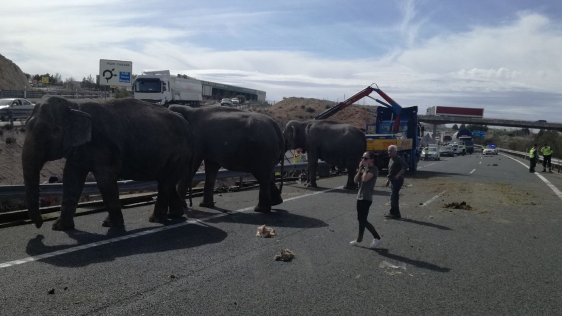 One elephant was killed and two others were injured after a truck carrying five pachyderms crashed on a highway.