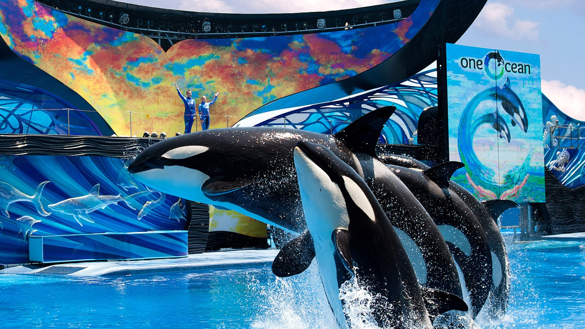 SeaWorld's new Shamu show One Ocean.
