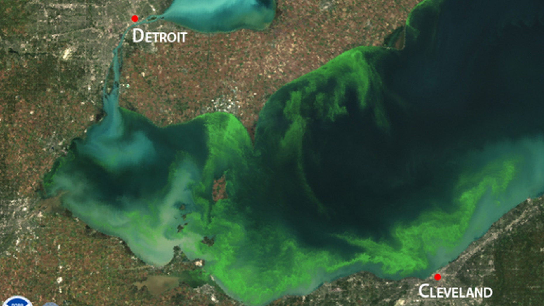 Satellite image of a toxic algae bloom in Lake Erie in 2011, one of the worst blooms in recent years.