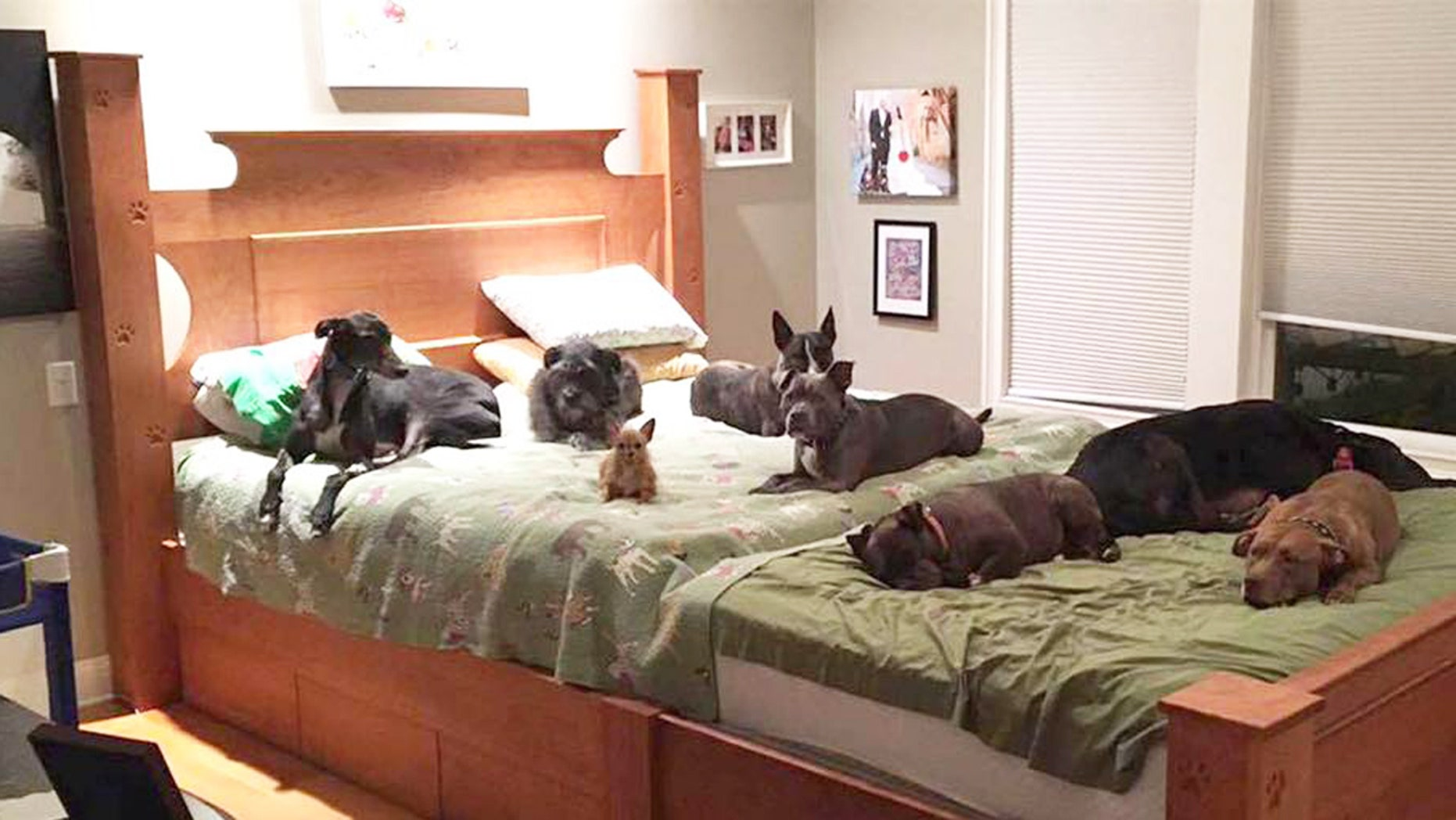 This handcrafted, supersized bed has room for two humans and eight four-legged friends.