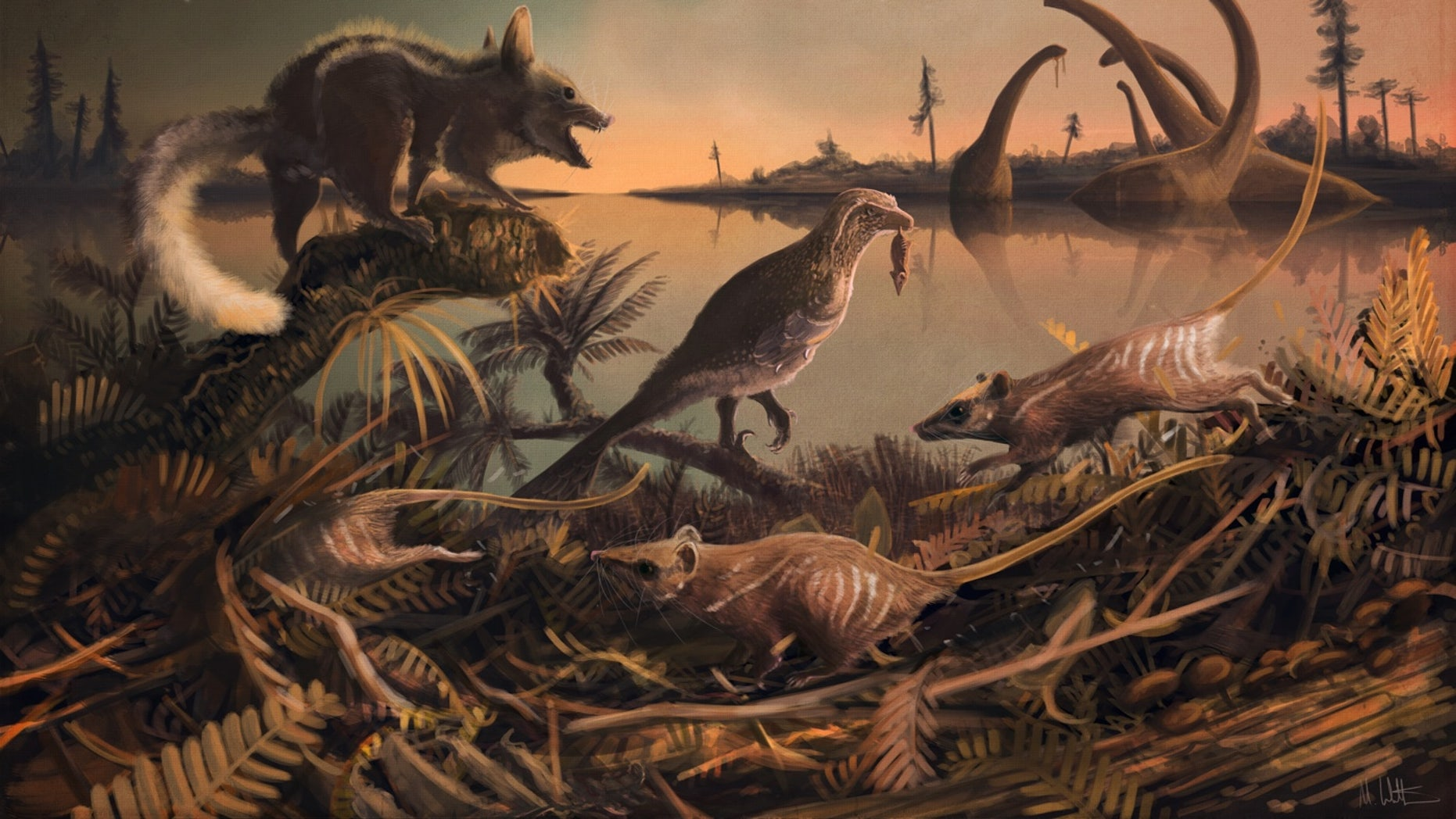 The earliest ancestors of eutherian mammals were small rat-like creatures (depicted in this illustration) that lived 145 million years ago in the shadow of the dinosaurs.