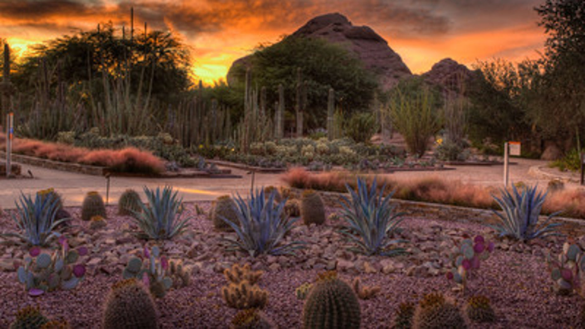 Desert Botanical Garden Ottosen Entry Garden at sunset.