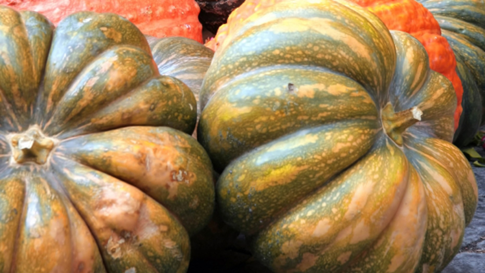 Pumpkins and squash as we know them only exist today because of early farming techniques.