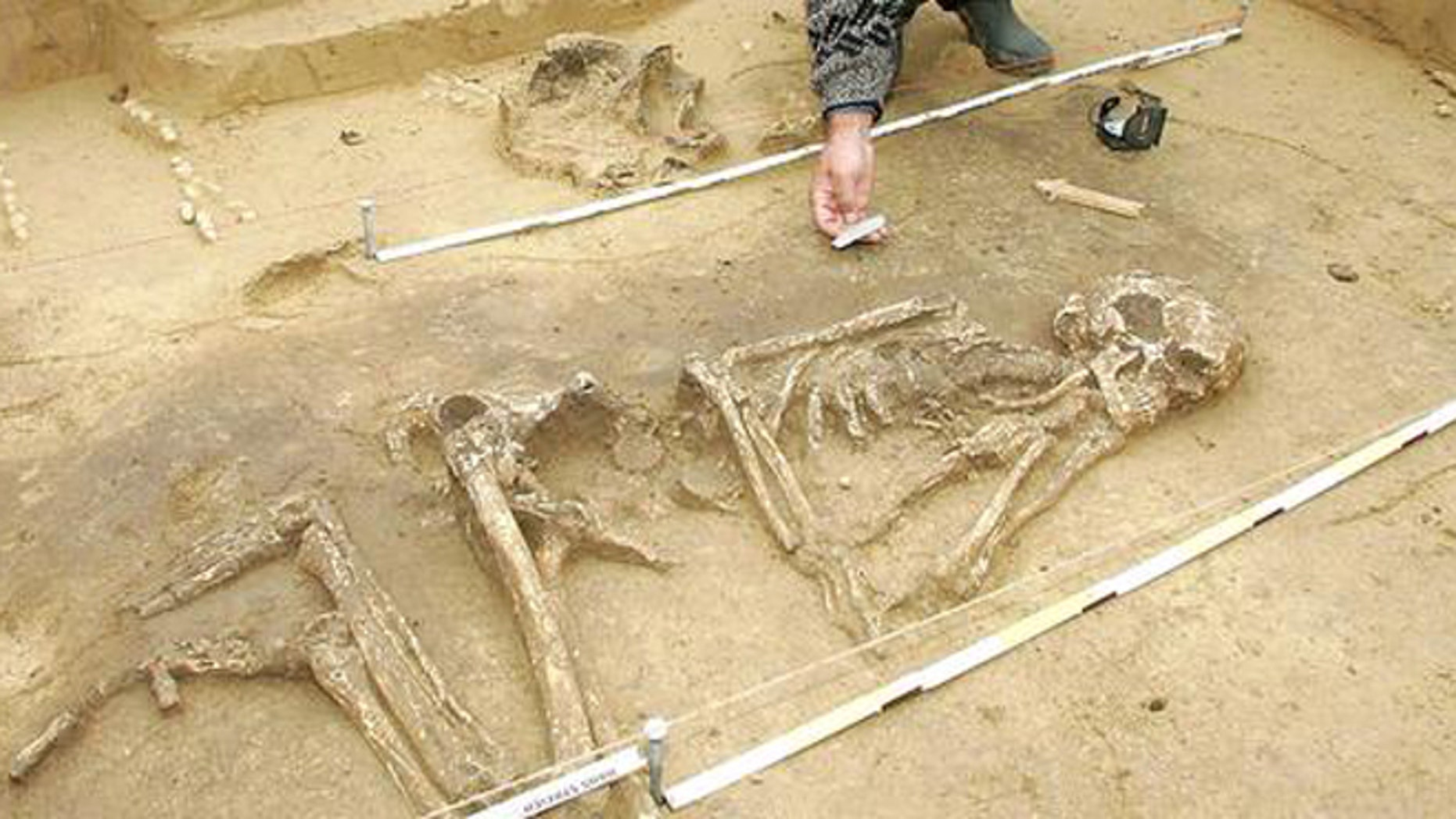 An archaeologist excavating a skeleton.