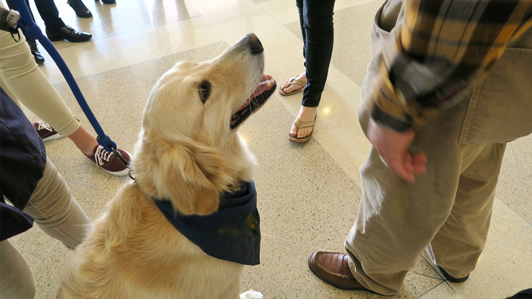 Coming soon to an airport near you: therapy dogs.