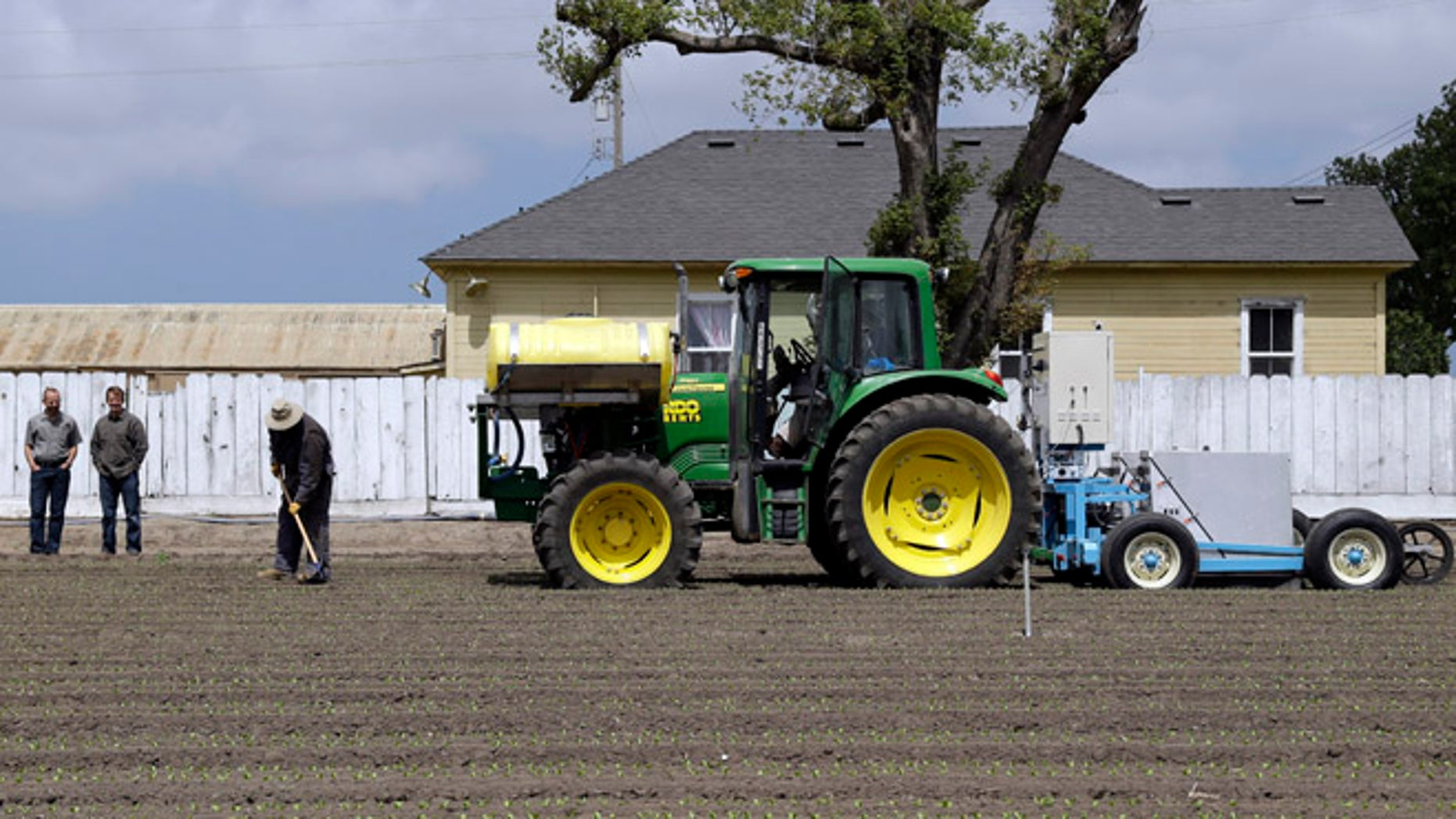 In this May 23, 2013, photo, the lettuce bot is dragged by a tractor during tests in Salinas, Calif. In the Salinas Valley, the lettuce capital of the world, entrepreneurs with the Silicon Valley company Blue River Technology are testing the Lettuce Bot, a boxy robotic machine that can thin fields of lettuce, a job that now requires detailed hand work by 20 farm workers.