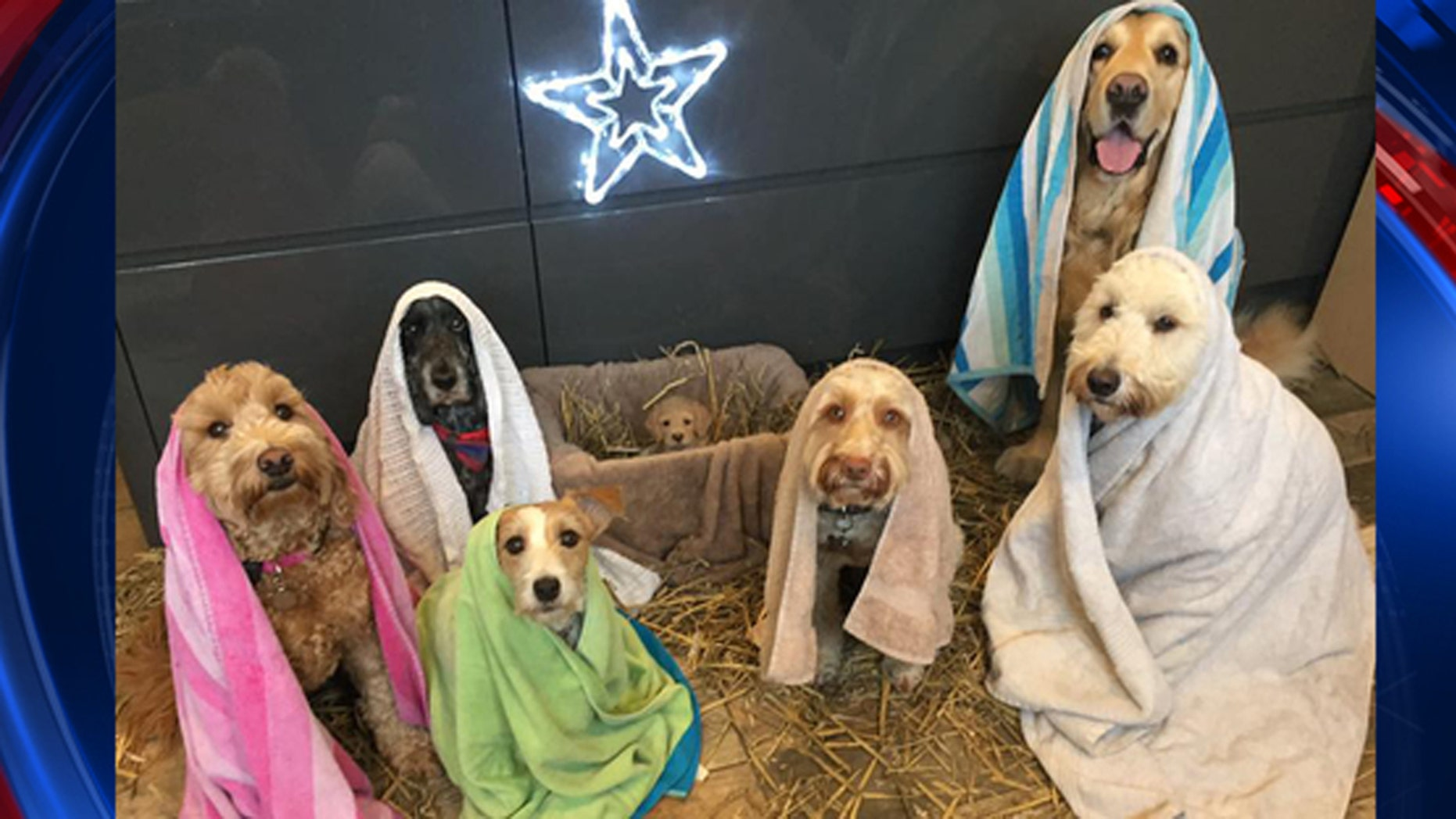 A UK dog groomer recreated the Nativity Scene using adorable pooches, including a puppy in the manger.