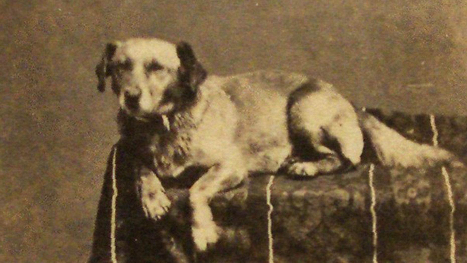 President Abraham Lincolns dog, Fido.