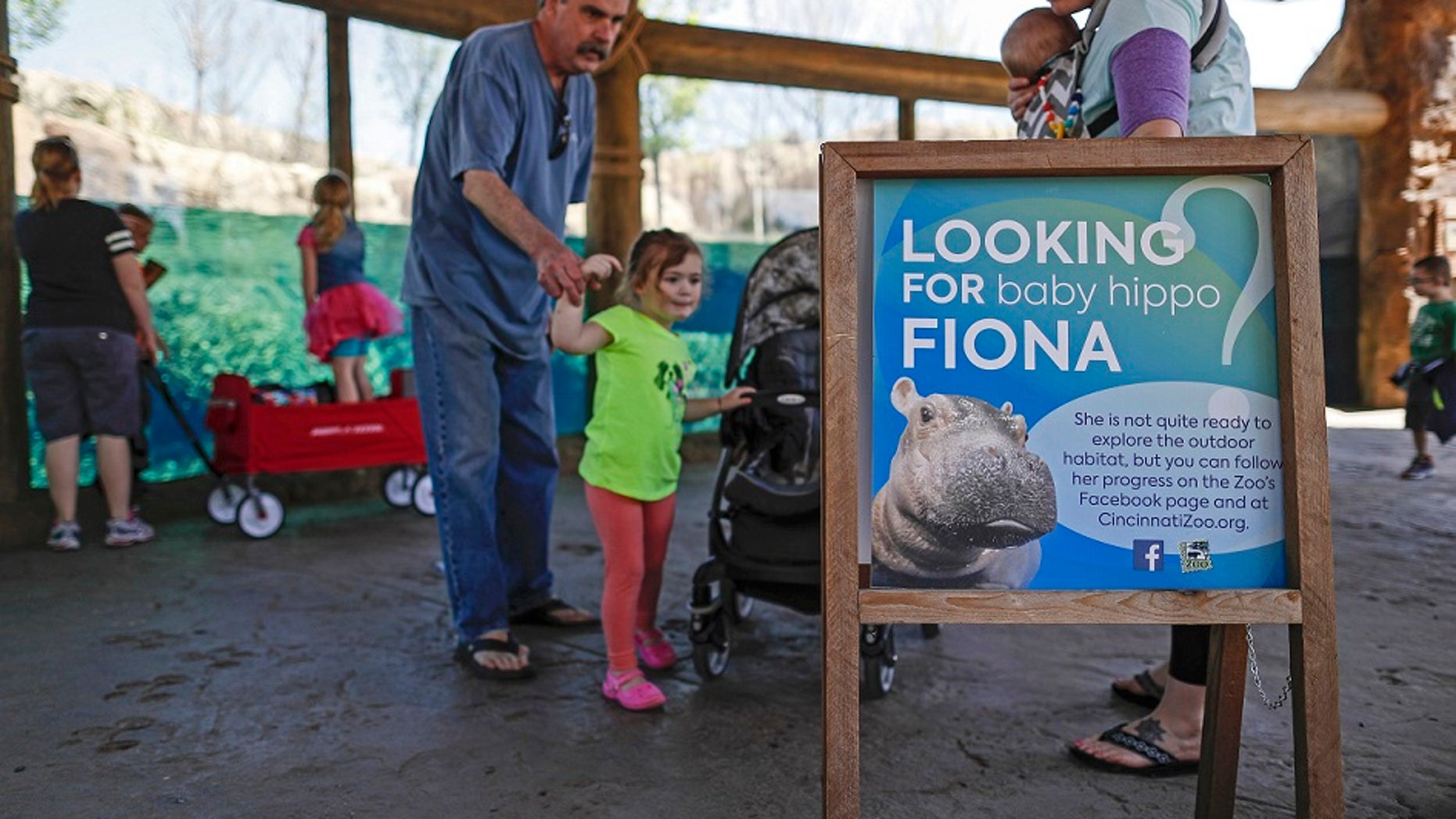The Cincinnati Zoo and Botanical Garden announced that Fiona the hippo will make her media debut on Wednesday, May 31, 2017.