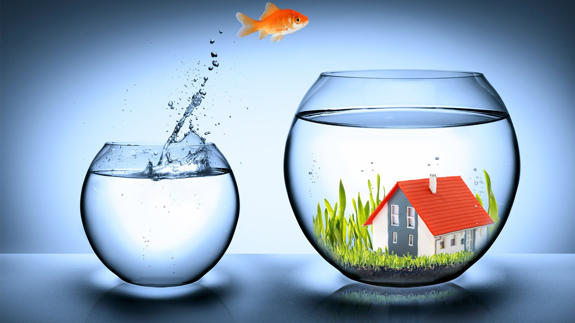 fish-going-to-new-house