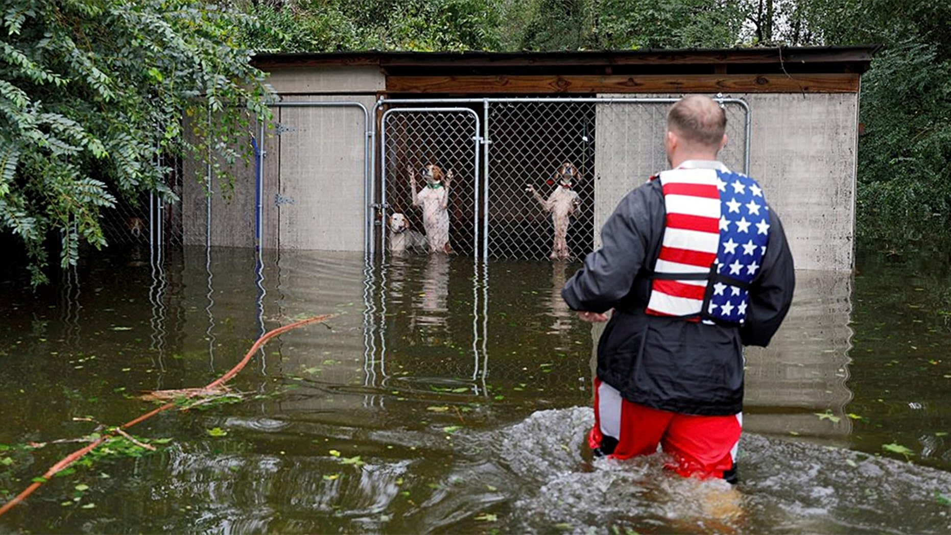 Panicked dogs that were left caged by an owner who fled rising flood waters in the aftermath of Hurricane Florence in Leland, North Carolina.