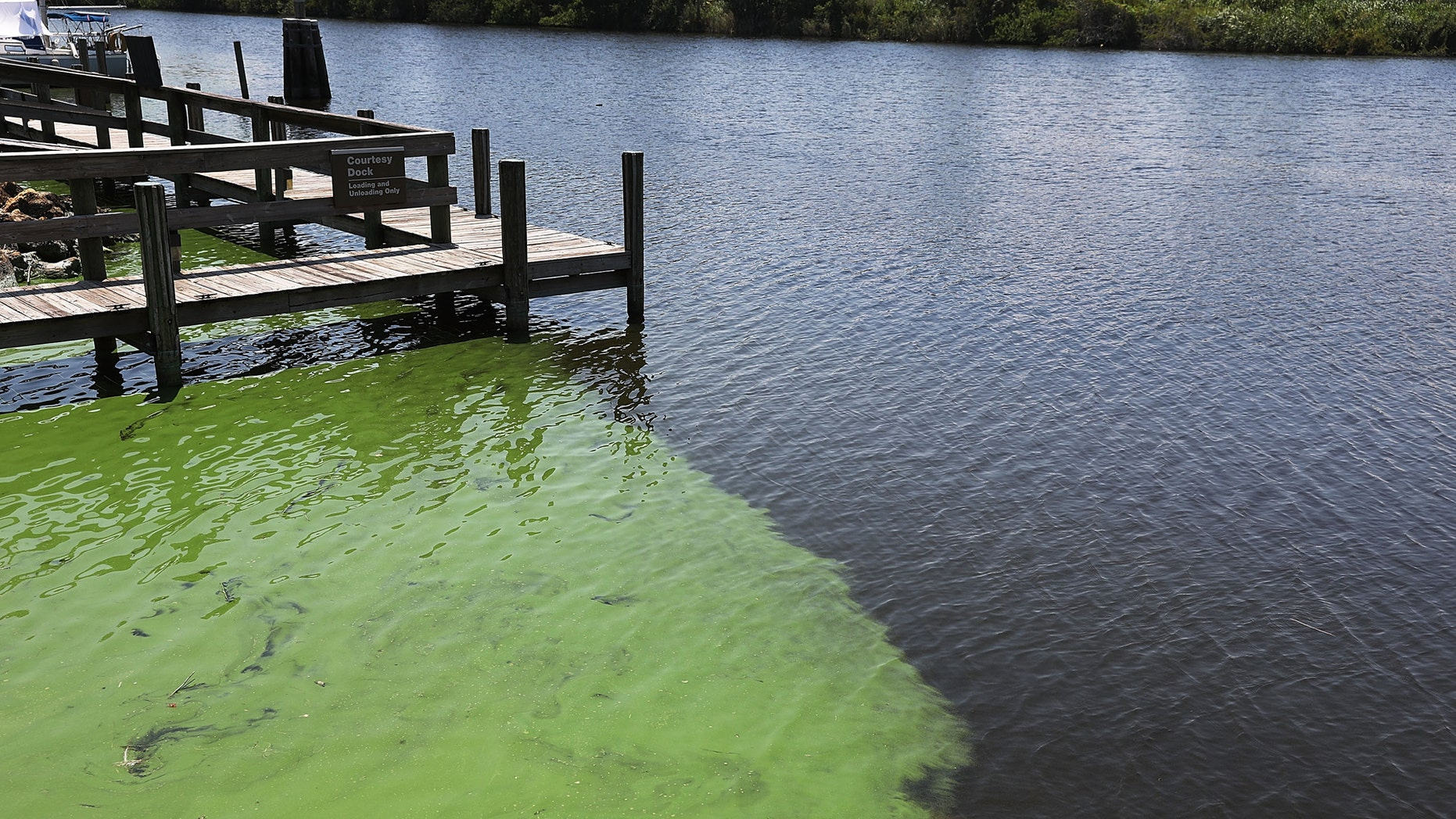 STUART, FL - JULY 13:  Green algae is seen in the St. Lucie River near Phipps Park on July 13, 2018 in Stuart, Florida. Water releases which carry the green algae from Lake Okeechobee resumed Friday morning into the Caloosahatchee River and into the St. Lucie River at Port Mayaca.  (Photo by Joe Raedle/Getty Images)