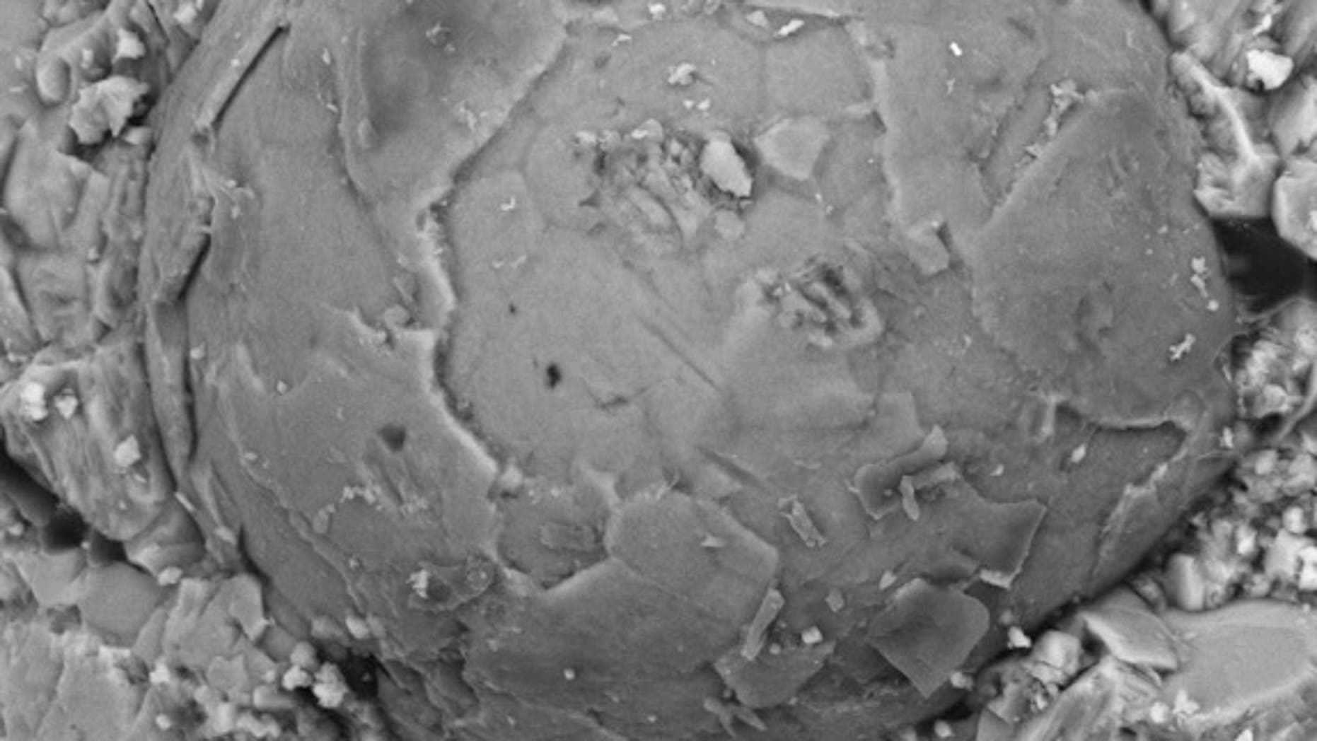A Cambrian embryo fossil exposed by acid etching on rock. The polygonal pattern suggests that the embryo was in the multicellular blastula stage of development.