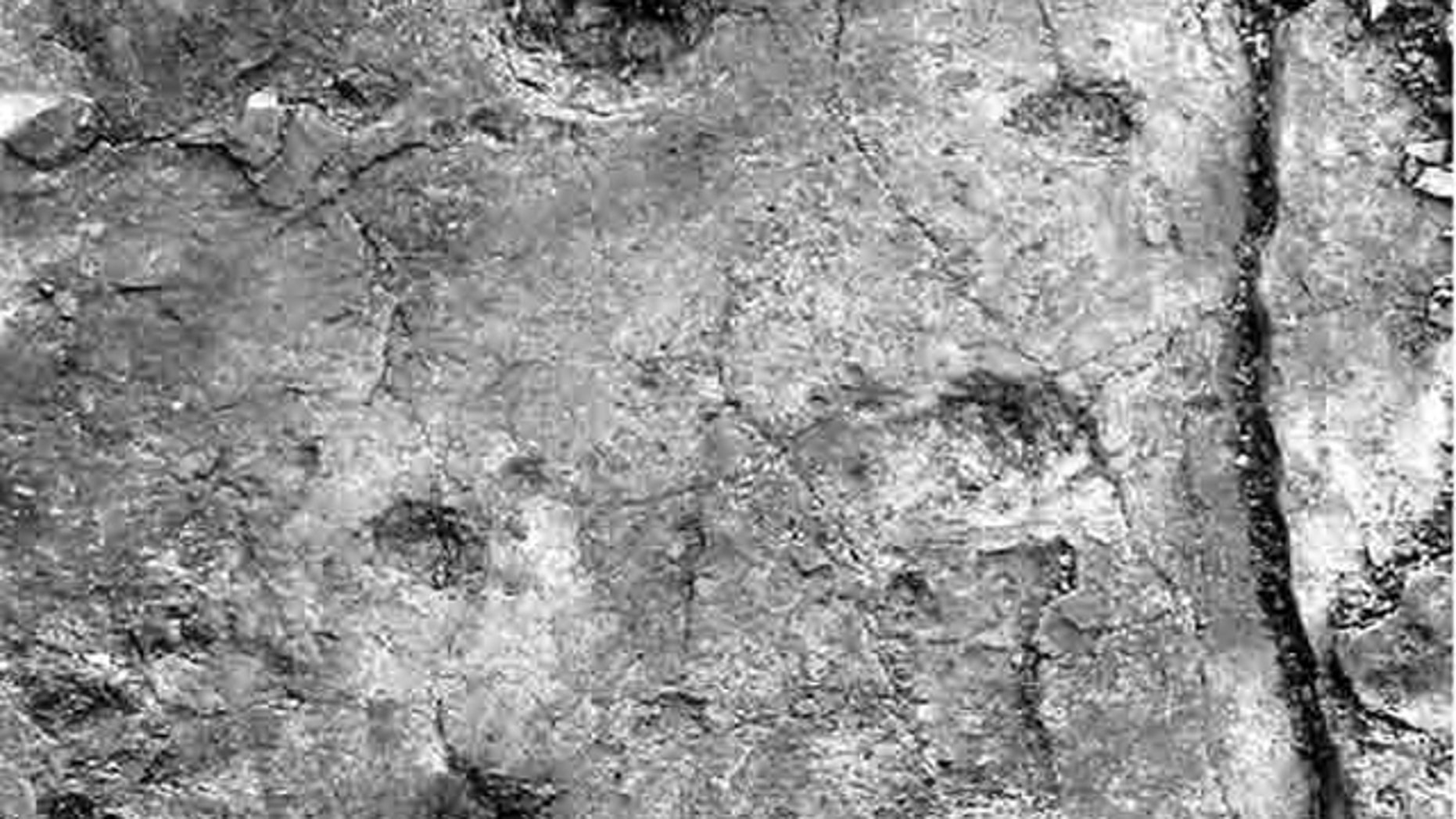 A track of fossilized 'hand' and 'foot' prints likely were made by a four-legged creature walking in a diagonal stride pattern, traveling from bottom to top as shown in the image.