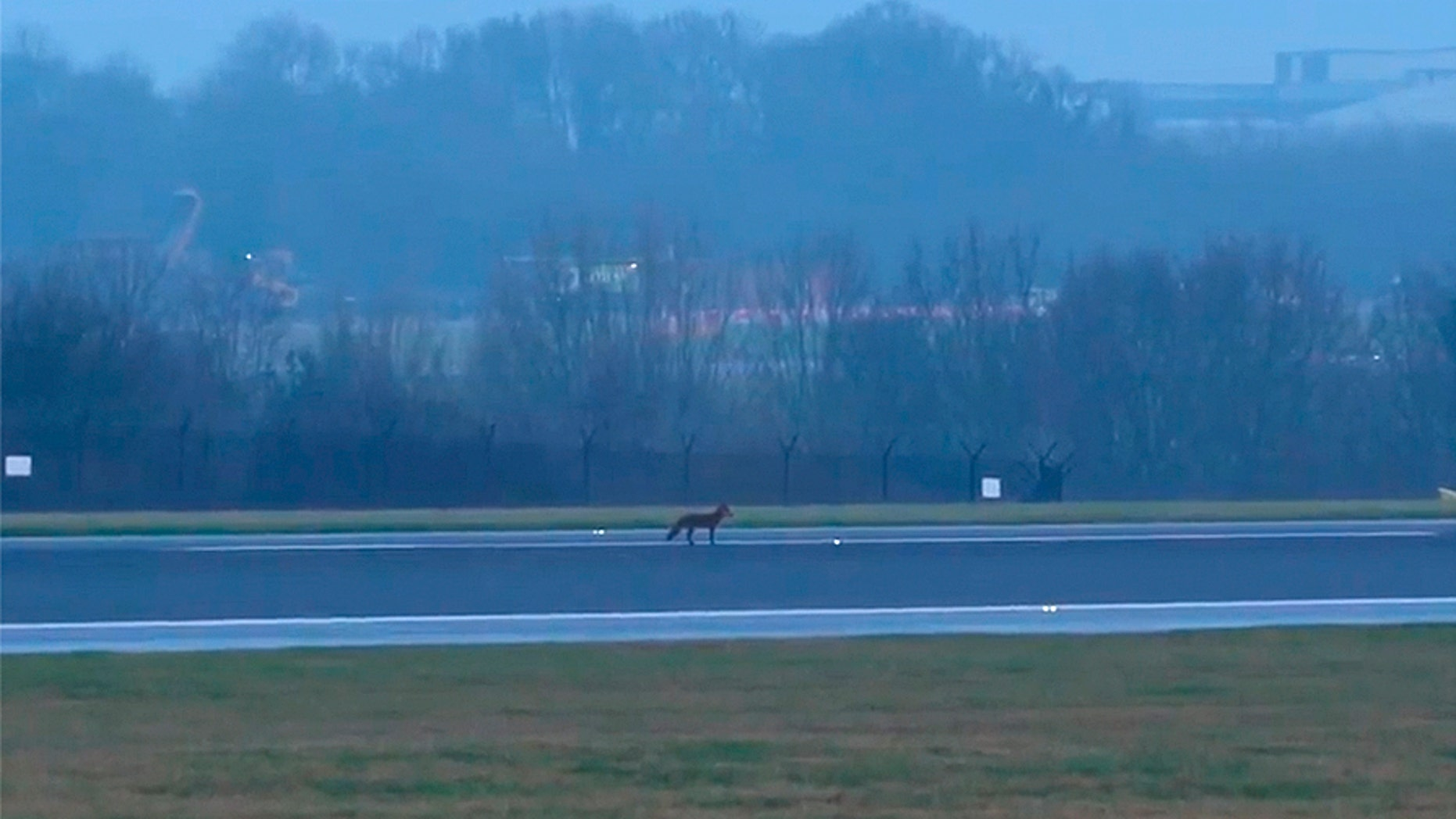 A fox on the runway reportedly halted operations at Manchester Airport in England.