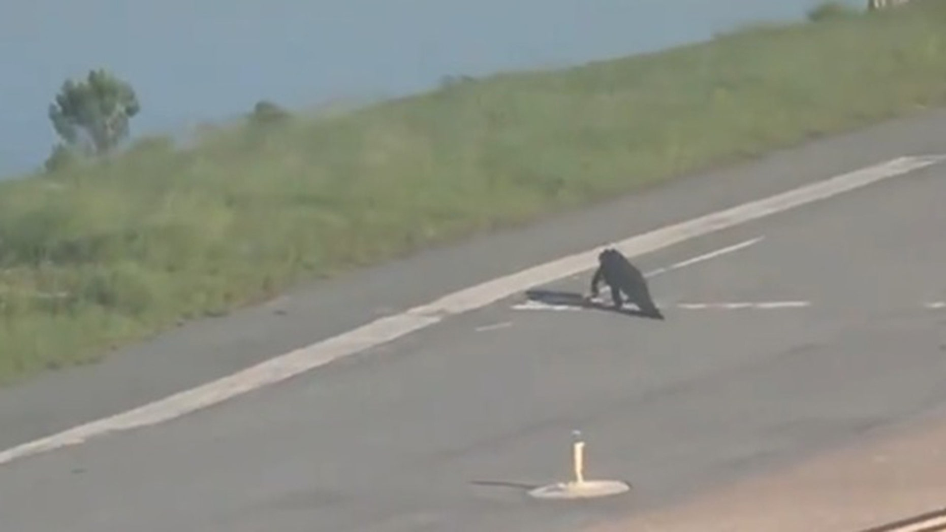 An alligator was caught crossing the runway at Orlando International Airport.