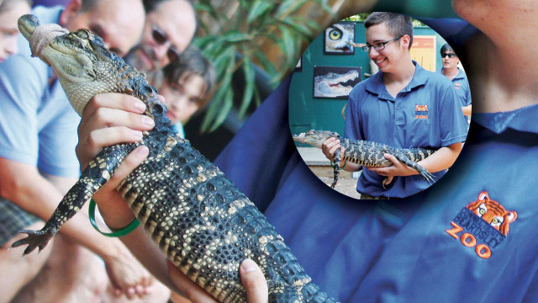 Beardsley Zoo's John Scott holds an American alligator.
