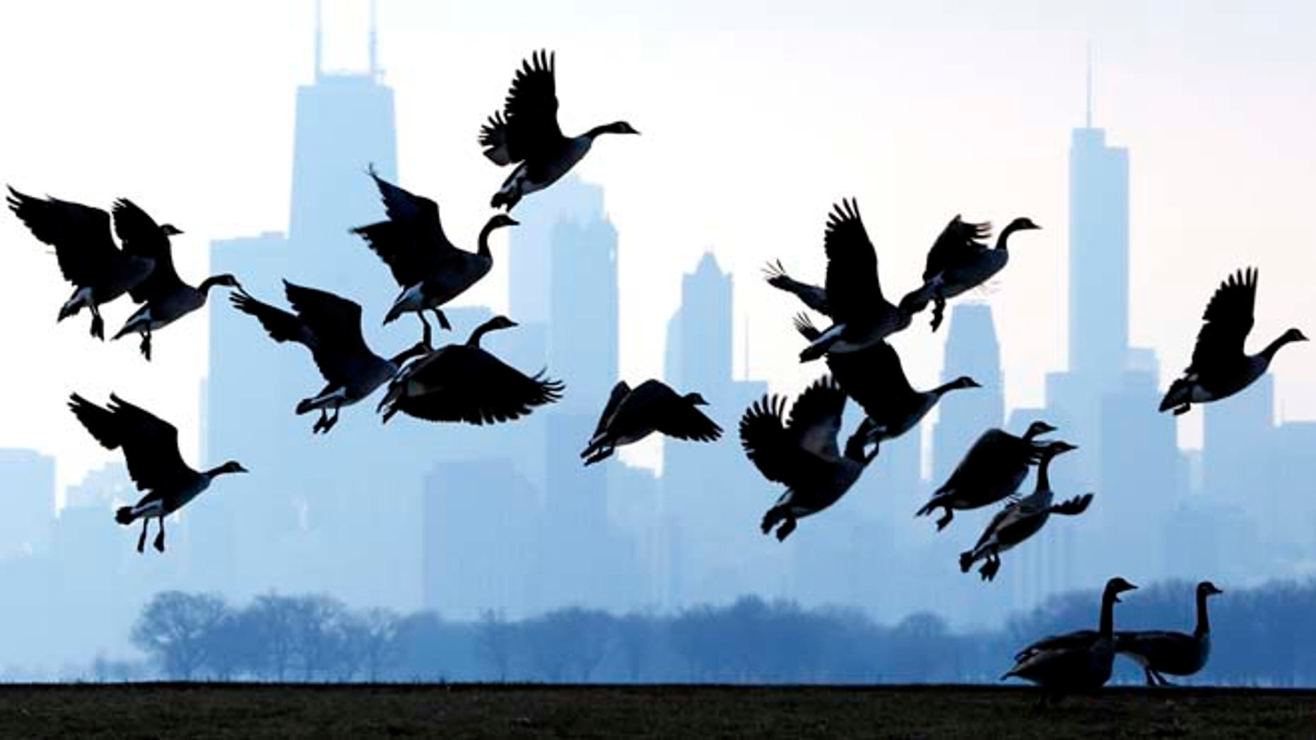 Jan. 6, 2013: This file photo shows geese flying over Lake Michigan at Montrose Beach in Chicago. The cost of six geese-a-laying spiked considerably this year, while most of the items in the carol The Twelve Days of Christmas, saw little to no increase, according to the 31st annual PNC Wealth Management Christmas Price Index. Six geese-a-laying now costs $360 versus $210 last year.