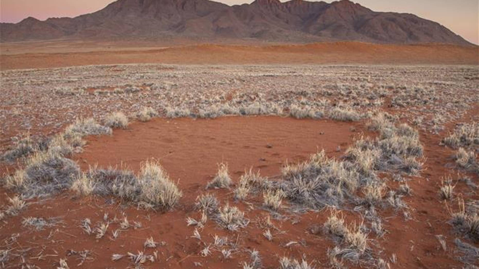 "In this photo provided by Jen Guyton, one of the mysterious ""fairy circles"" in the Namib Desert that dot the area with circular barren patches.  (Jen Guyton/www.jenguyton.com via AP)"