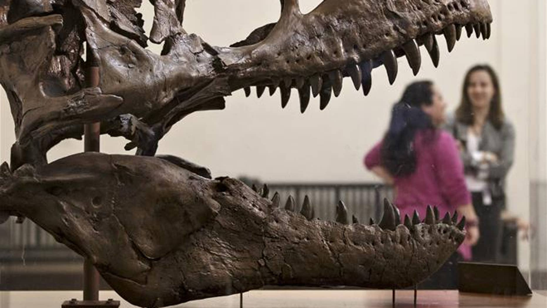 A Tyrannosaurus rex at the Smithsonian Museum of Natural History in Washington.