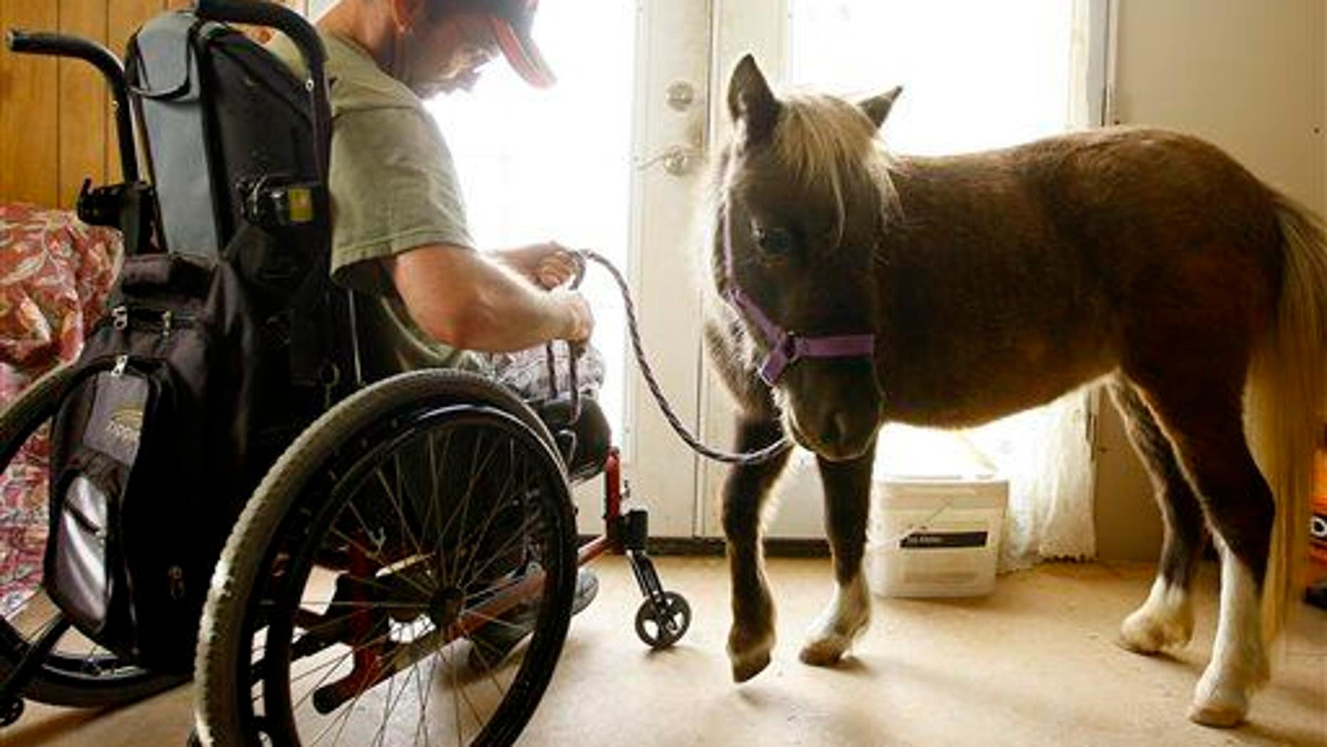 Malcolm Gray prepares to go outside with his miniature horse Danny at his house in Douglas, Wyo.