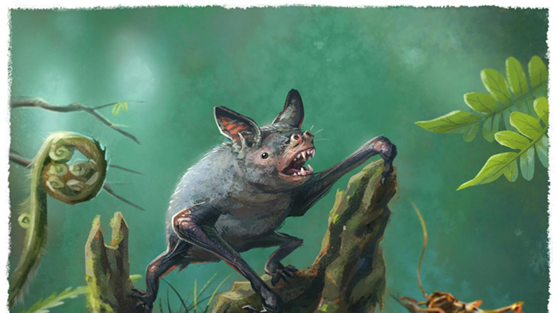 An artist's impression of a New Zealand burrowing bat, Mystacina robusta, that went extinct last century. The new fossil find, Vulcanops jennyworthyae, that lived millions of years ago in New Zealand, is an ancient relative of burrowing or short-tailed bats.  (CREDIT: Illustration by Gavin Mouldey.)